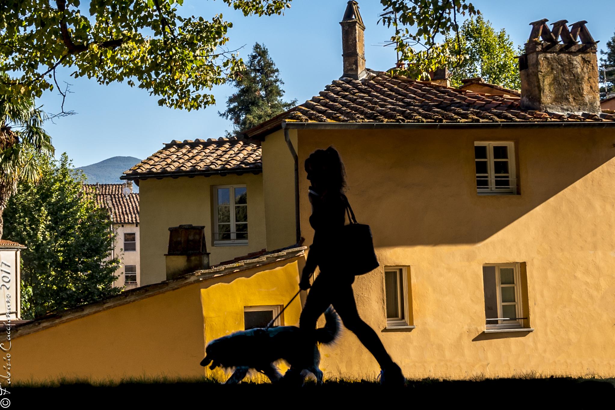 A passeggio con il cane...