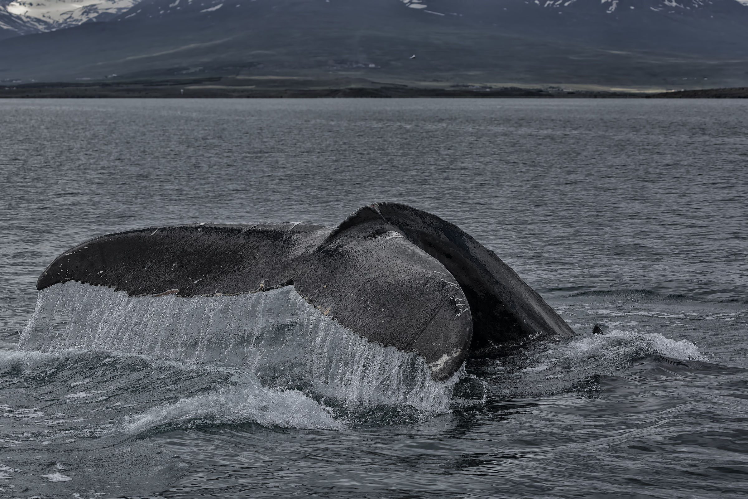 The hole of the humpback...