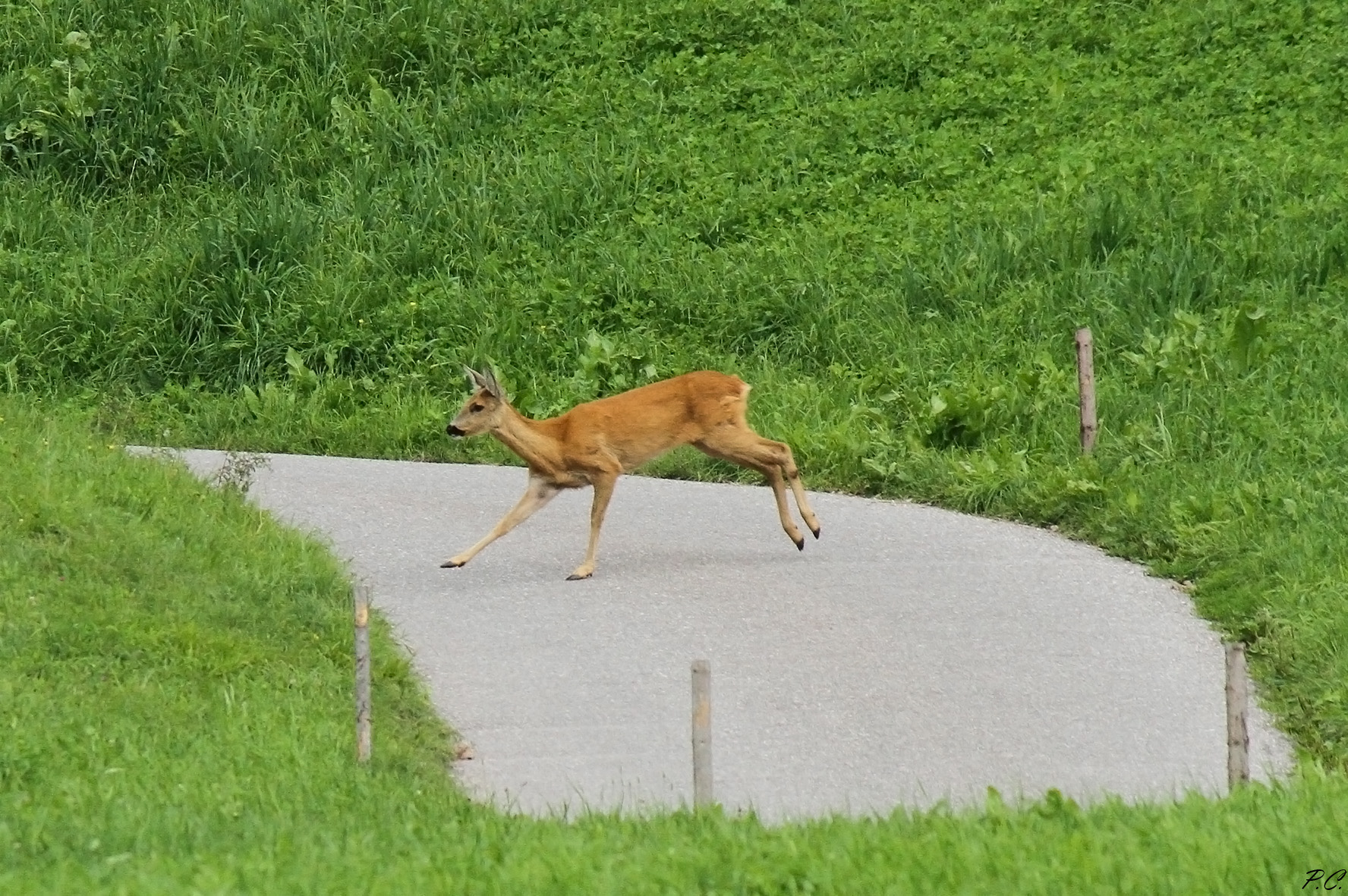 Careful crossing wild animals...