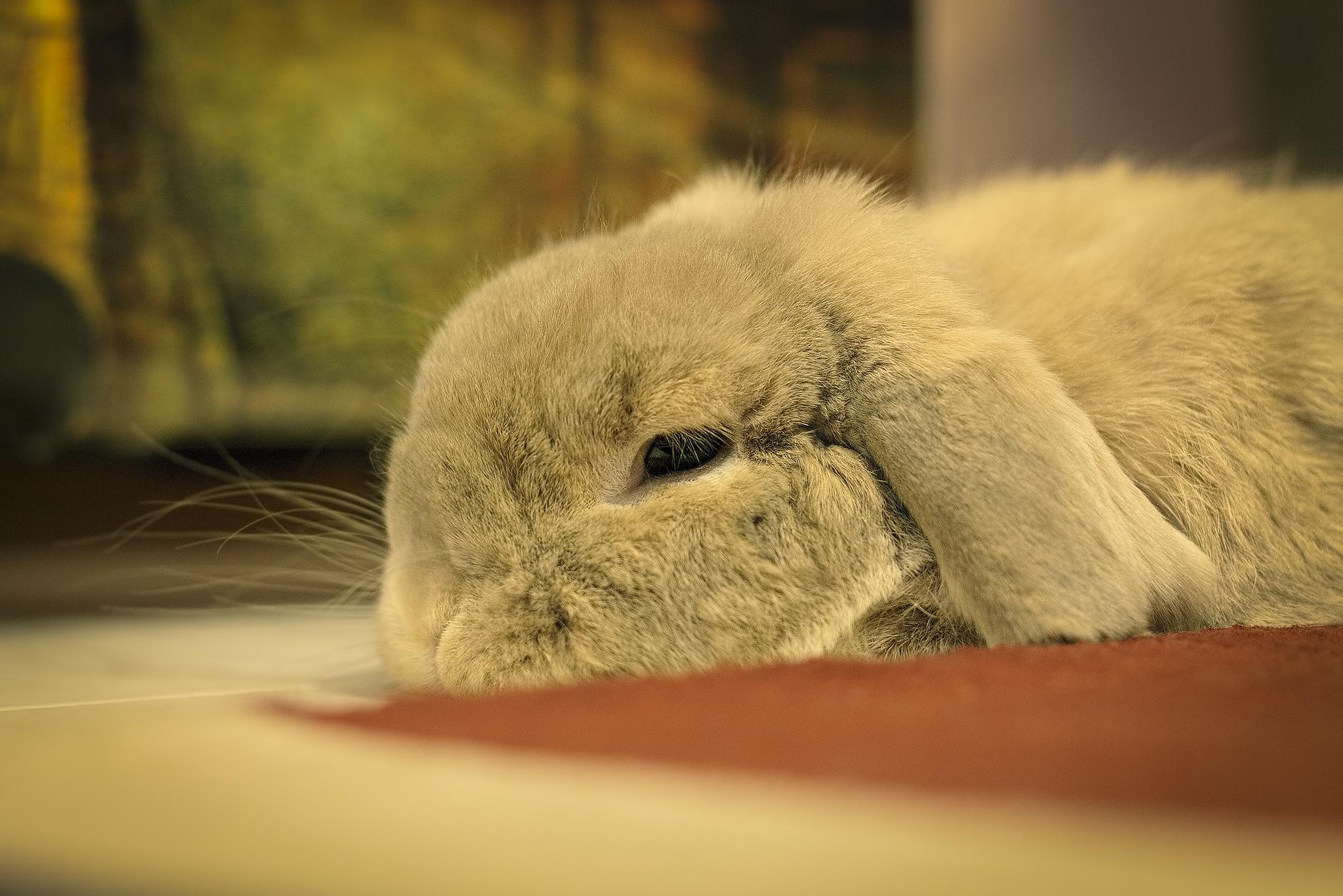 Dredd sleepy...