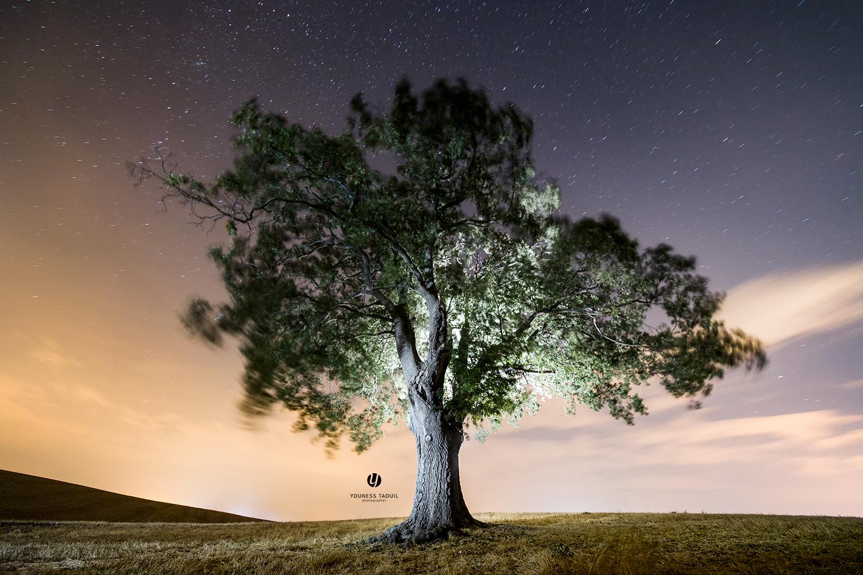 albero l'esplosione lentissima di un seme....