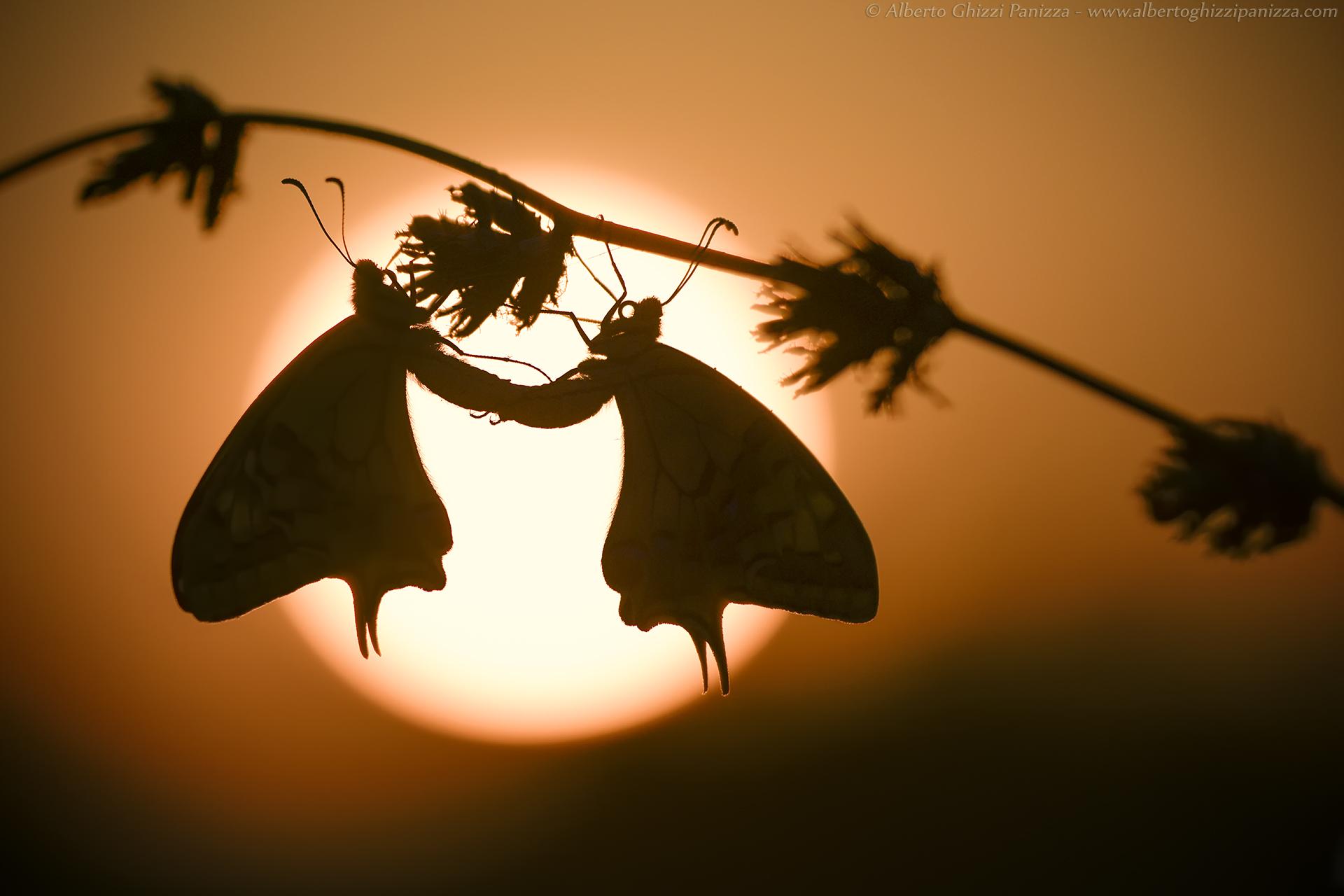 Sunrise love...