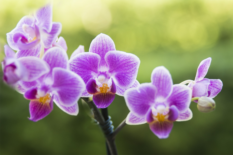 orchidee...