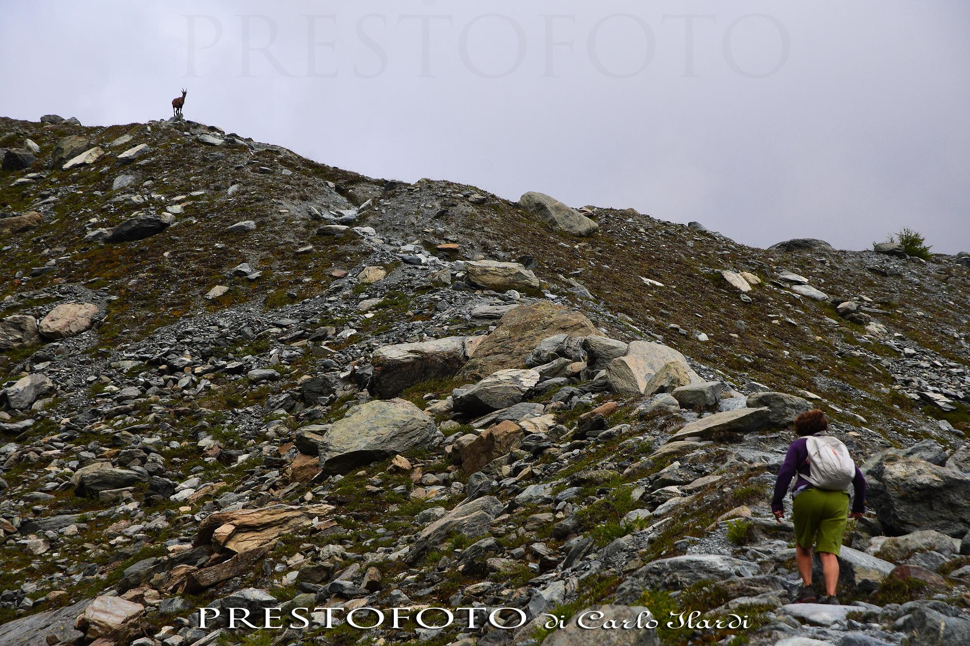 il guardiano del sentiero (monterosa, rifugio mezzalama...