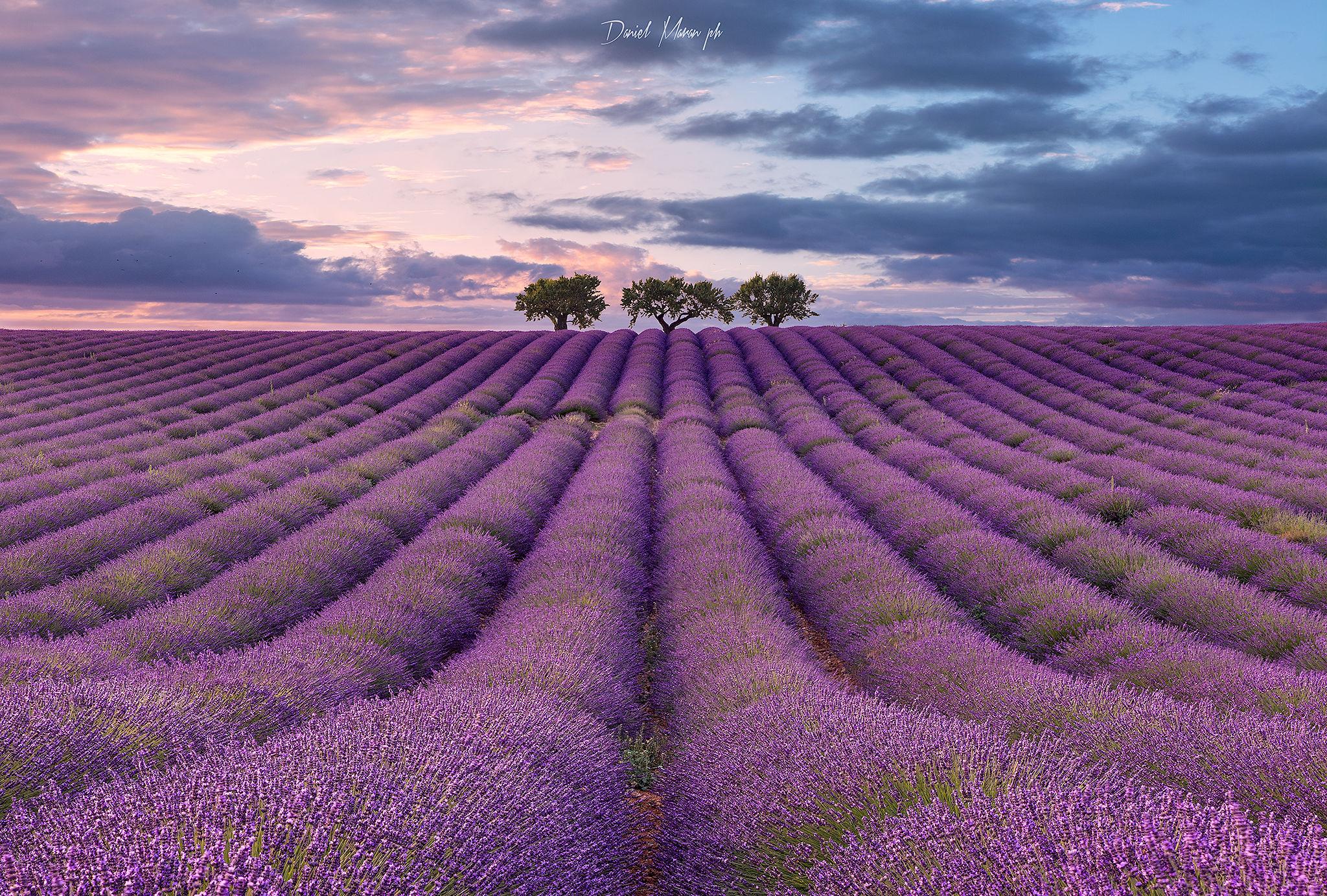 The violet city...