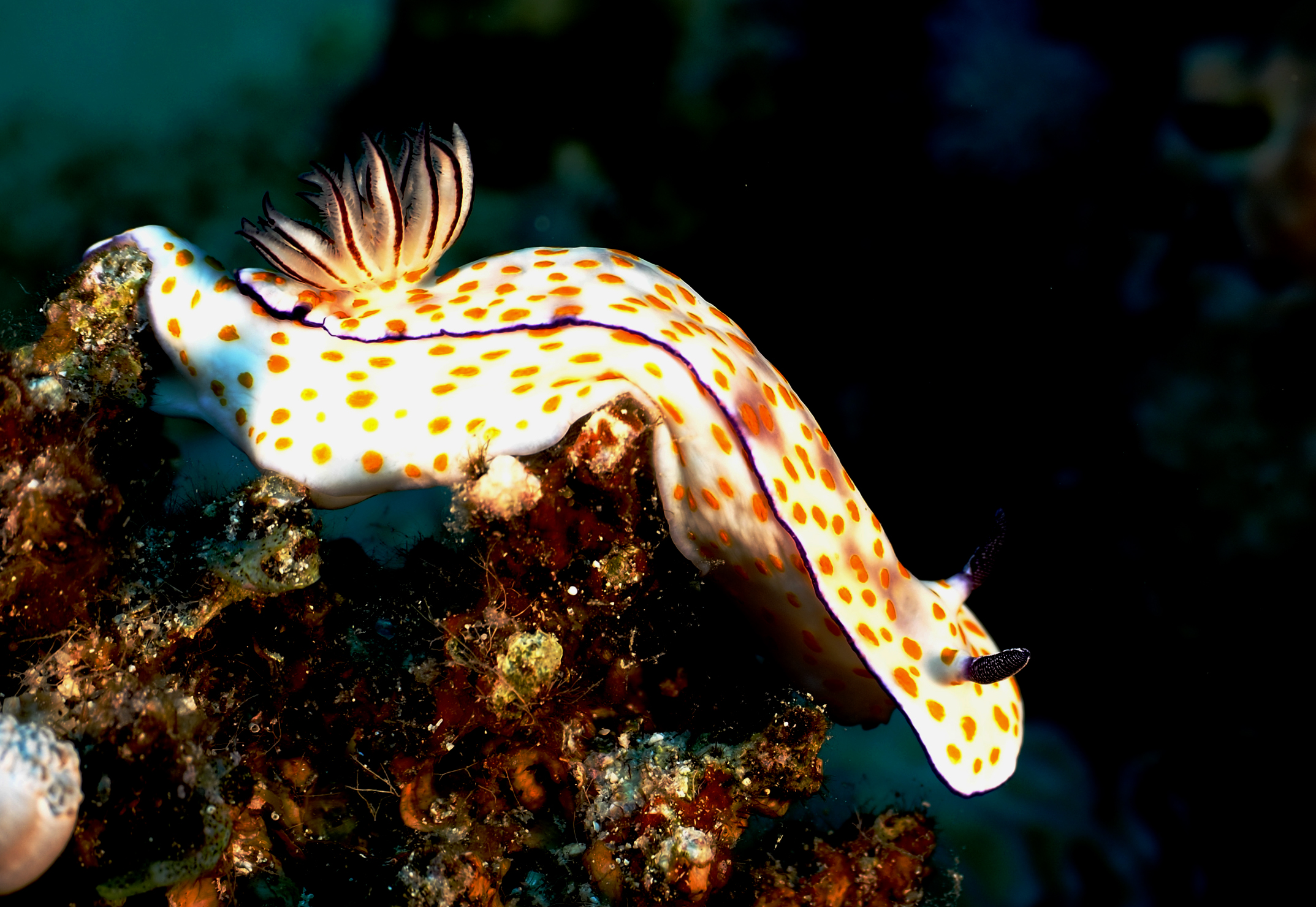 Nudibranco 3...