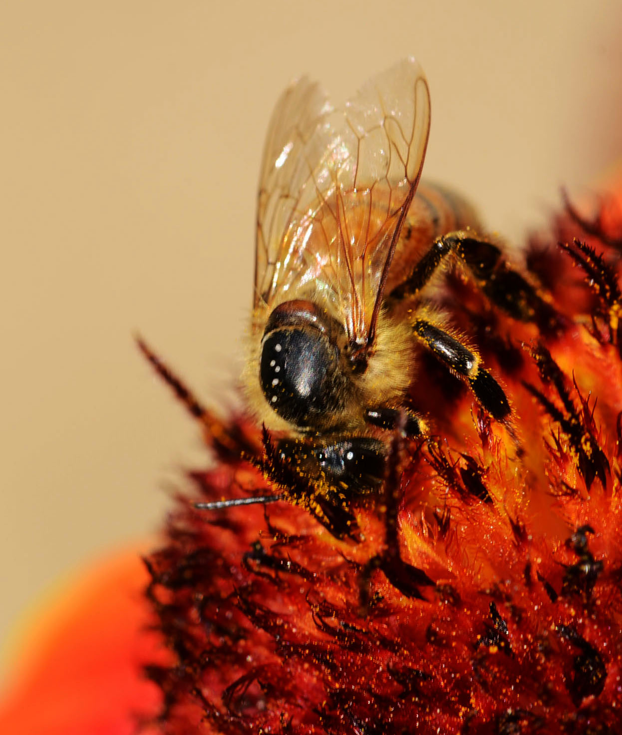 Bee at work ......