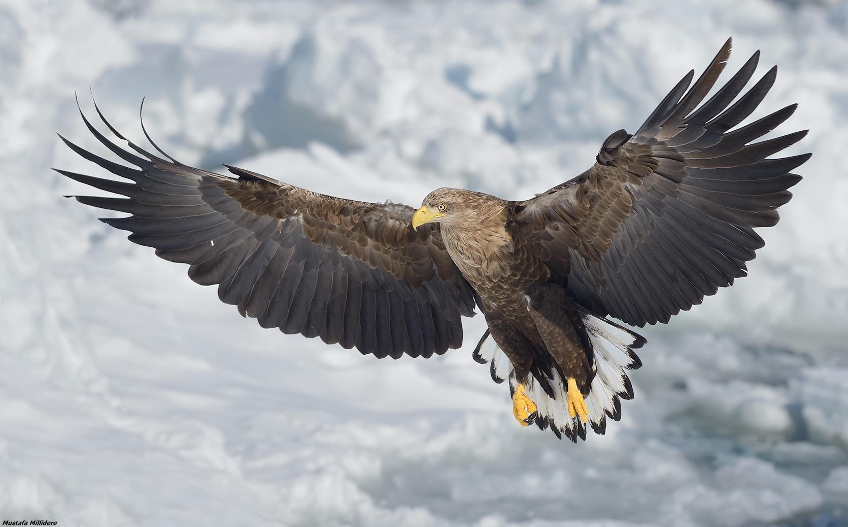 Wingspan ......