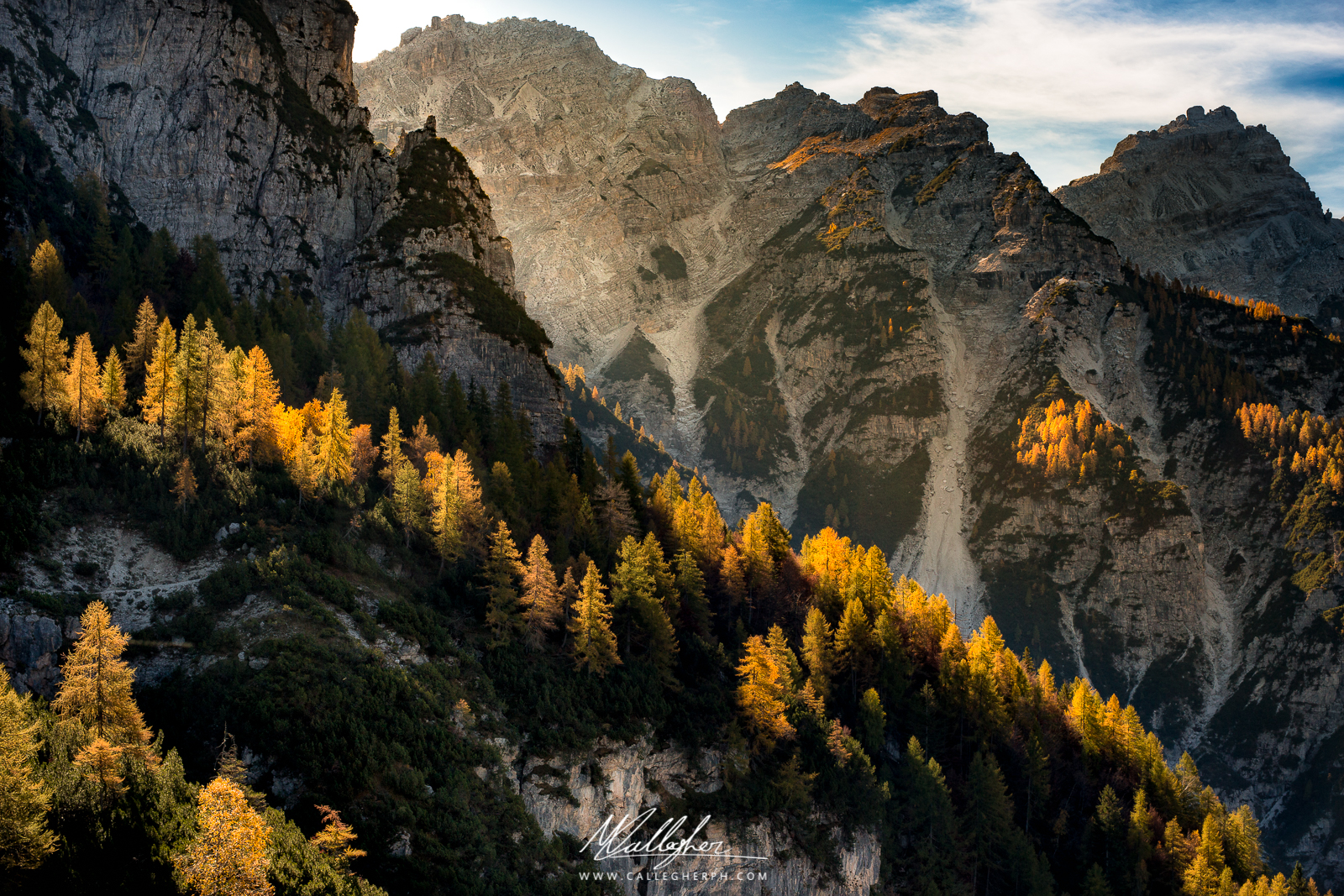 The larches light up...