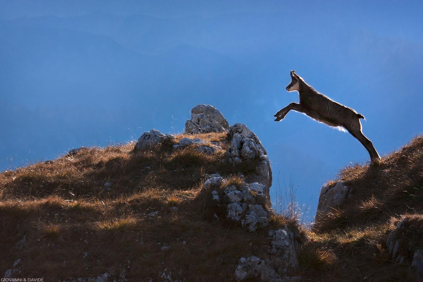 jump .......