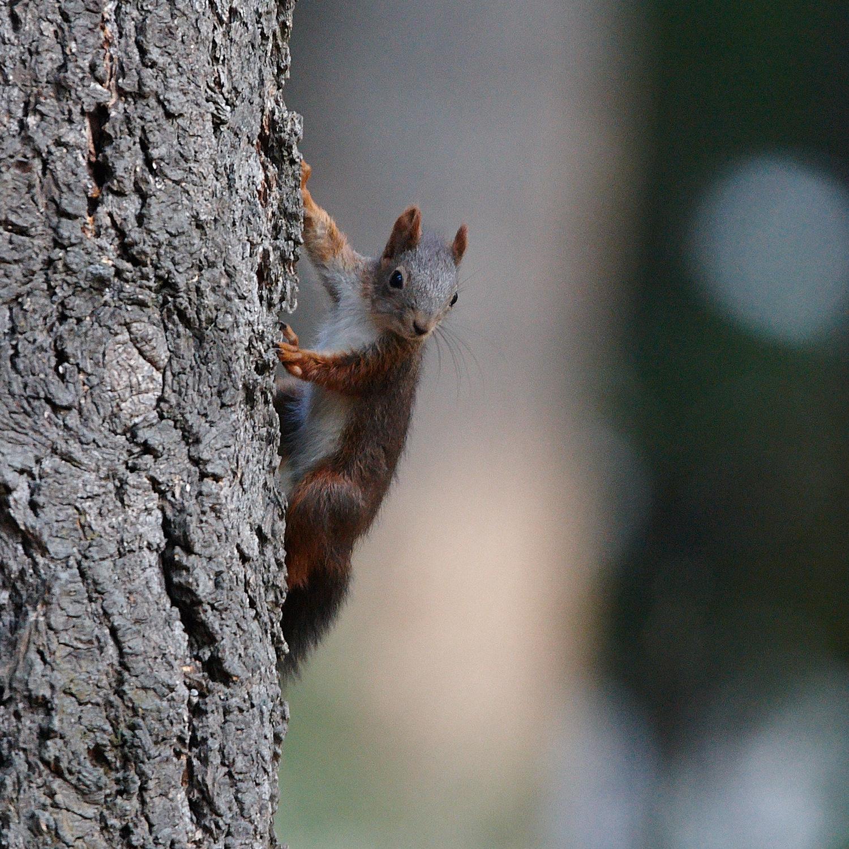 Squirrel...