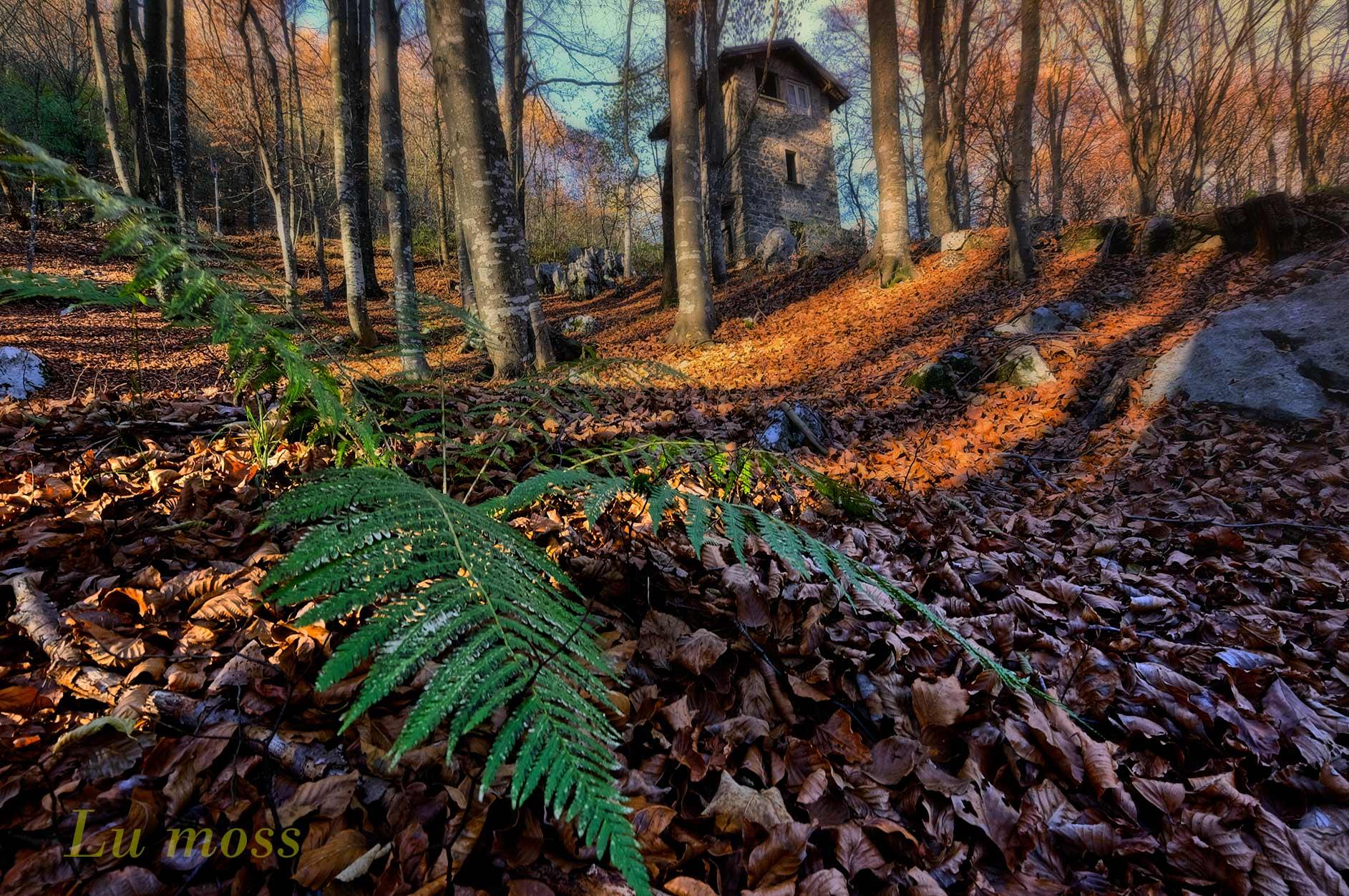 Autumn in Roncola....
