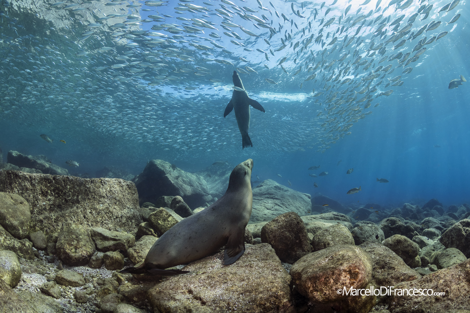 Sea lion and Sardines...
