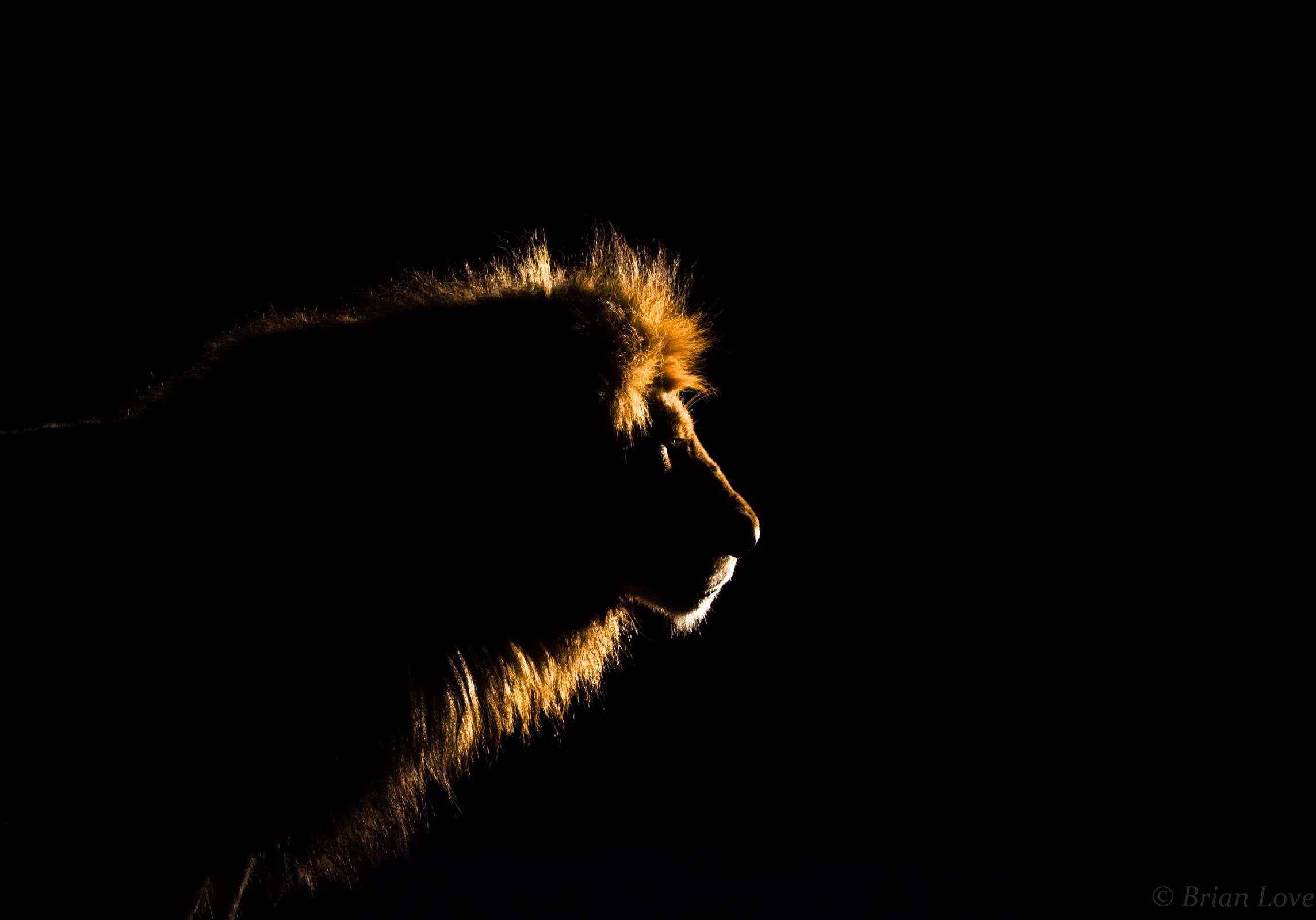 A Kings Golden Crown...