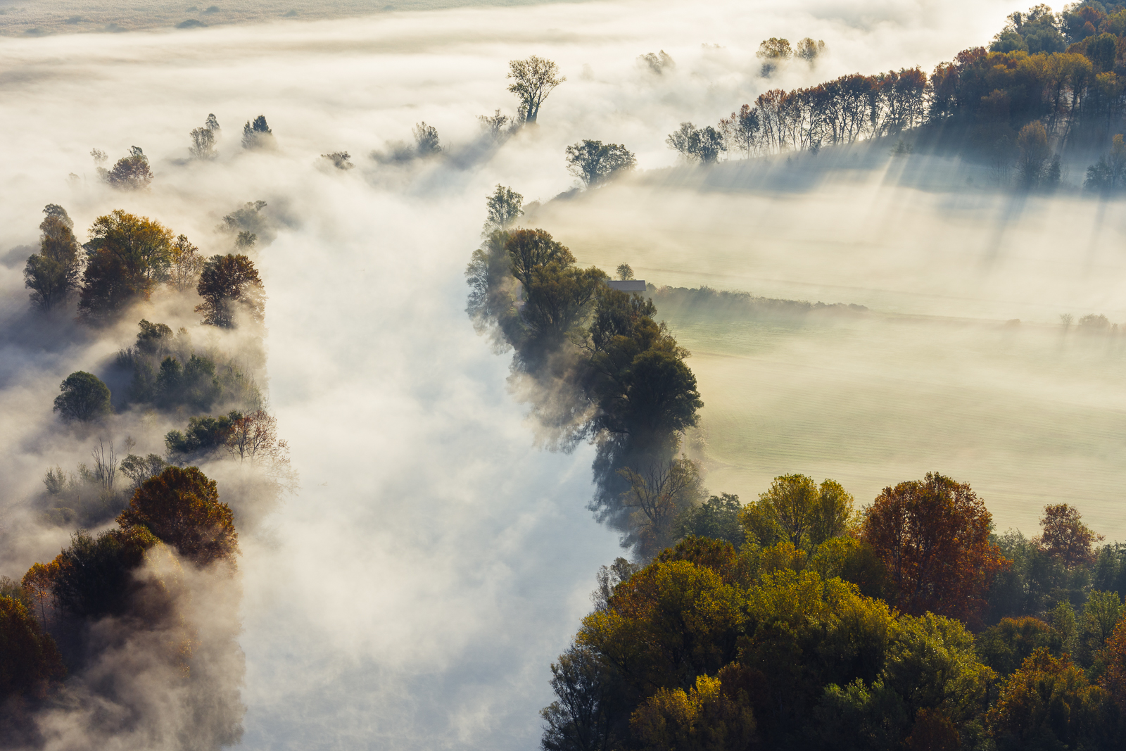 Trees in the fog...