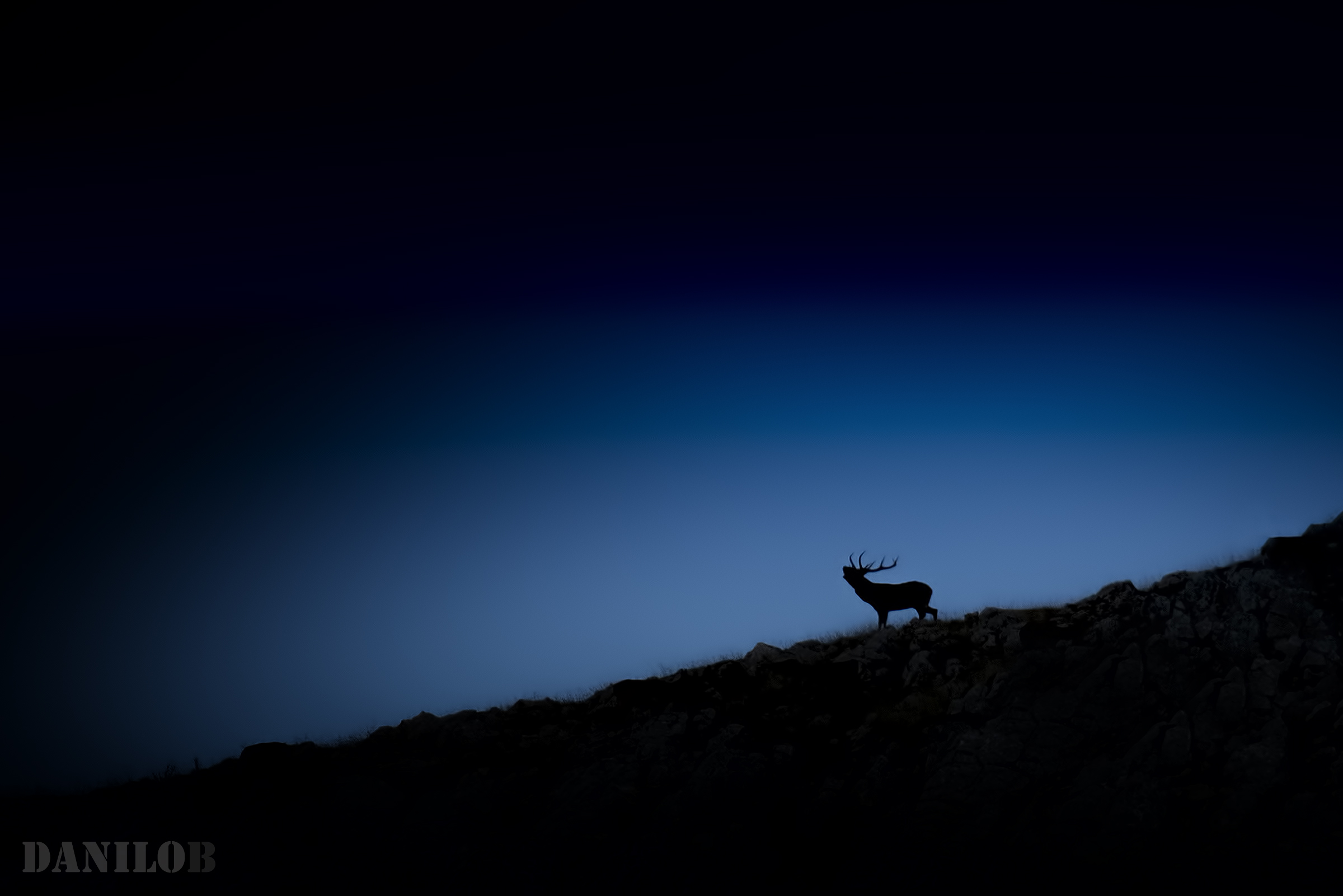 ... at the dusk of a silhouette ......