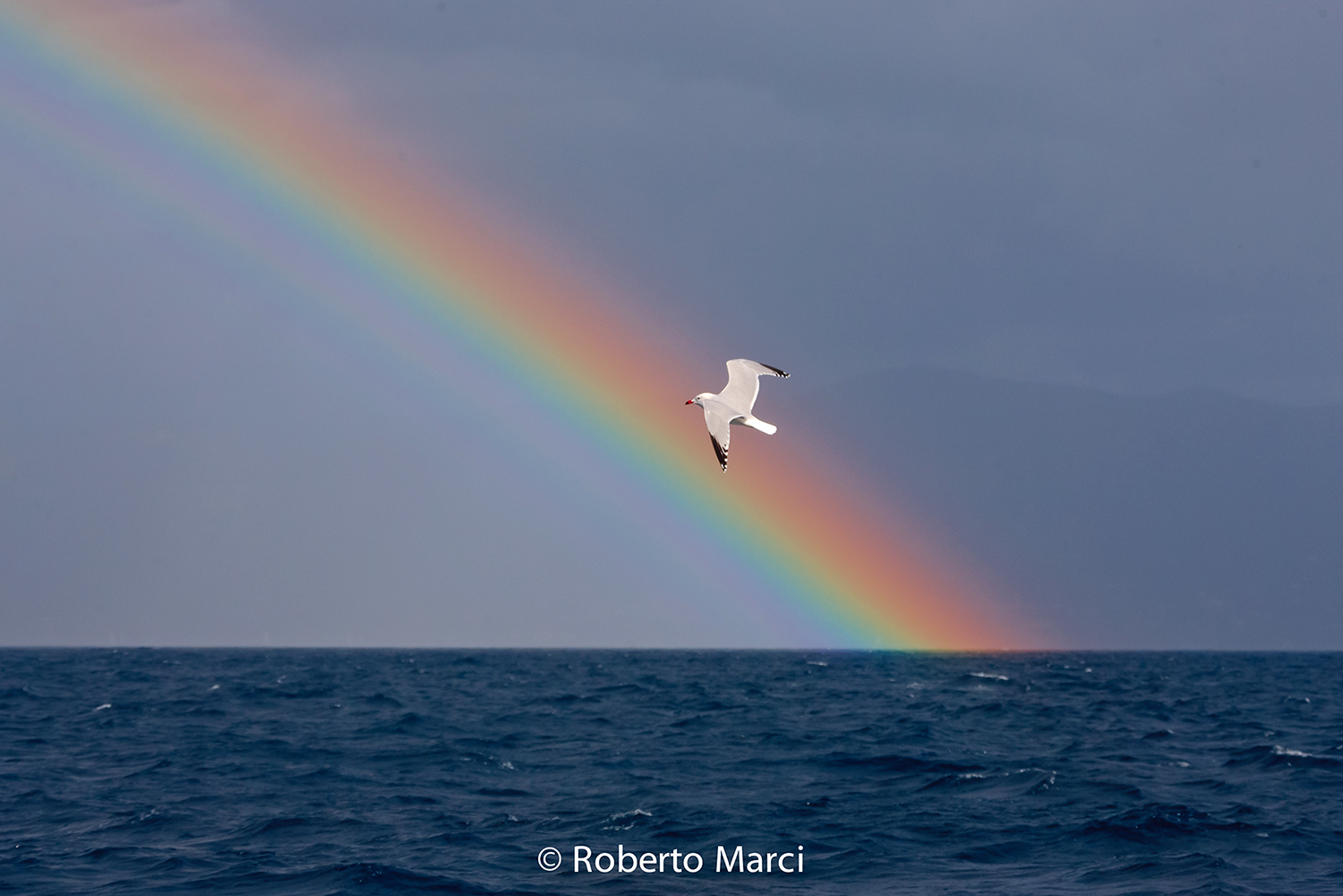 The Seagull in the Rainbow...