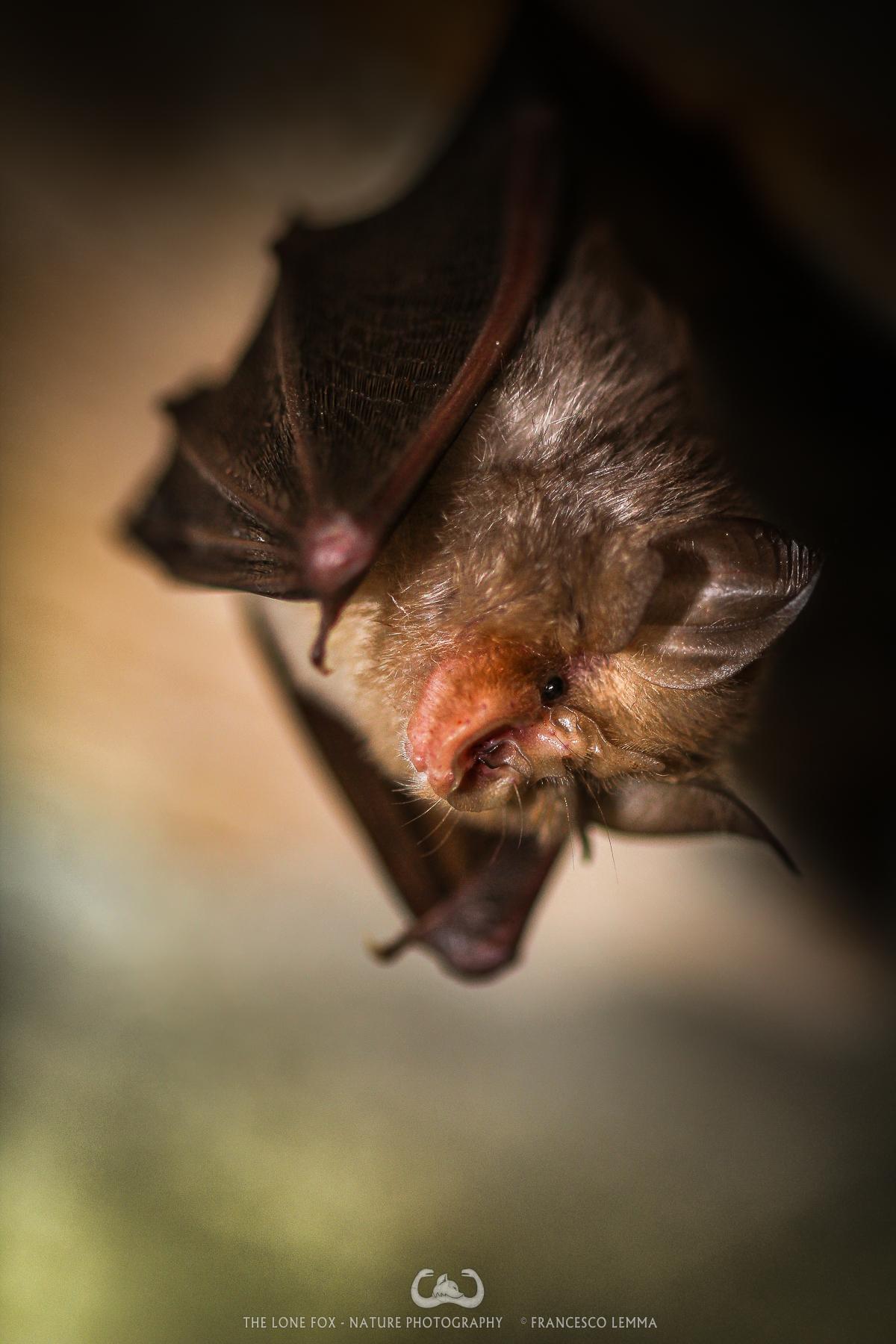 Bat...