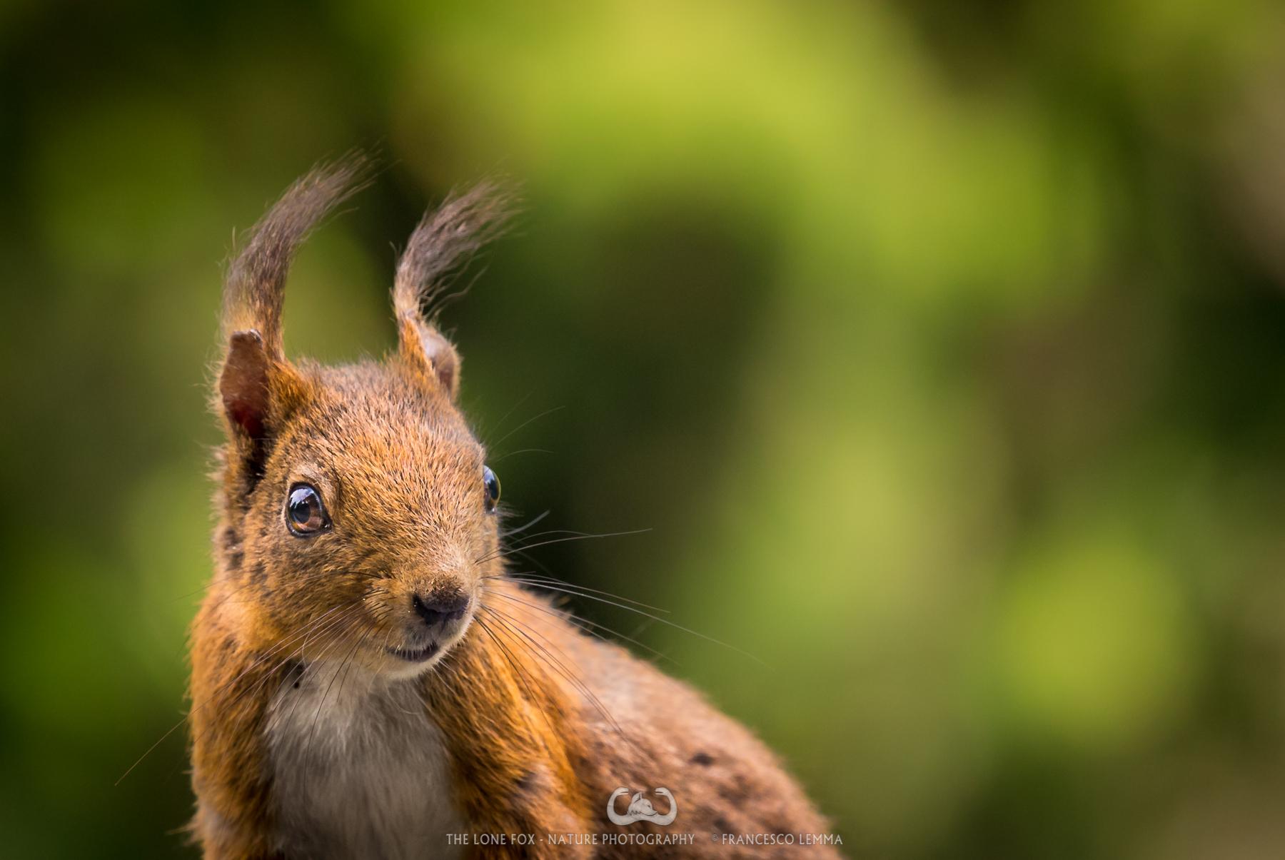 Little ears...