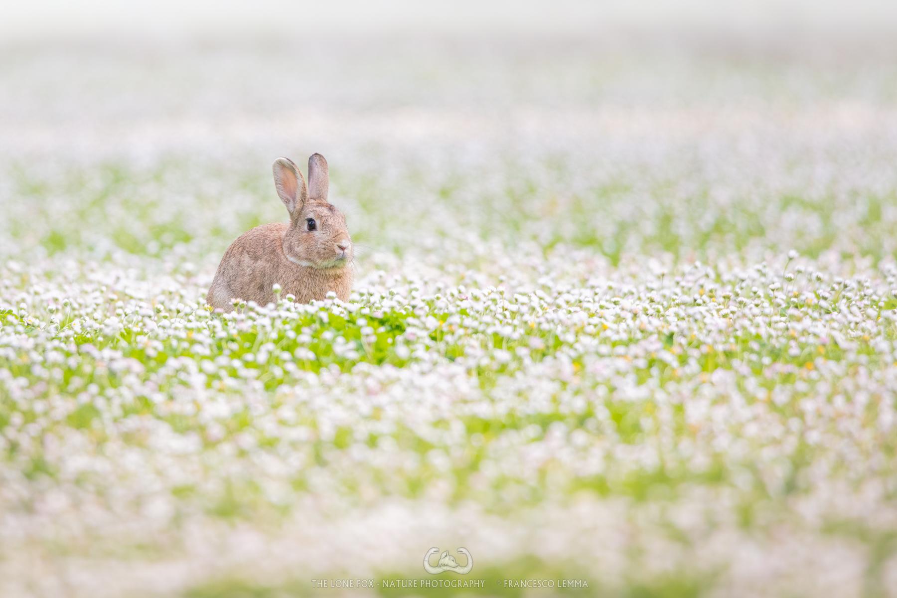Grass Hopper...