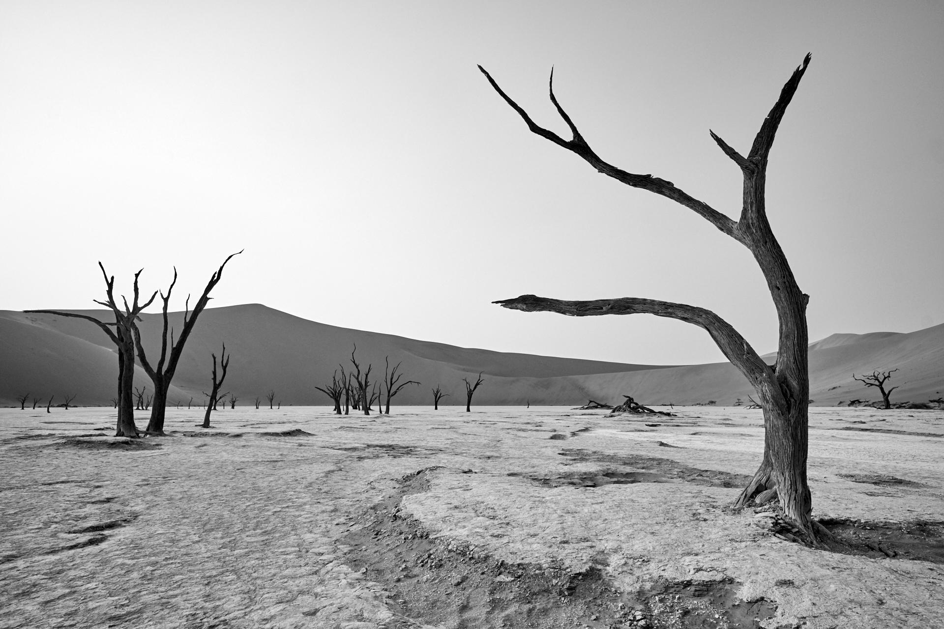spettri nel deserto...