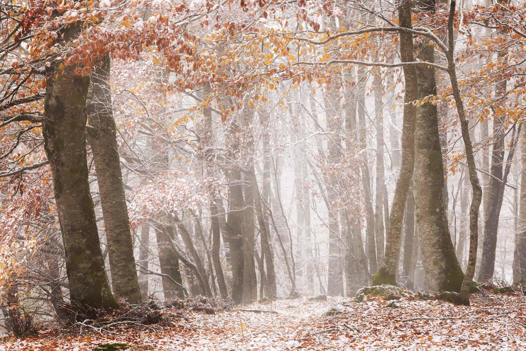 Prima neve d'autunno (Monte Livata- Appennino Centrale)...