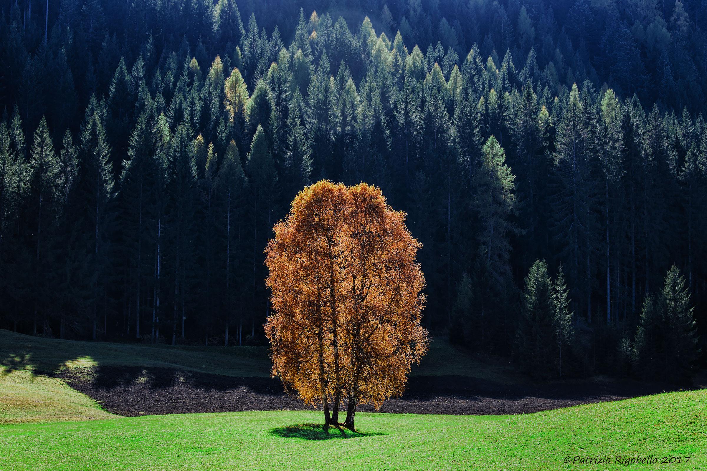 The happy tree...