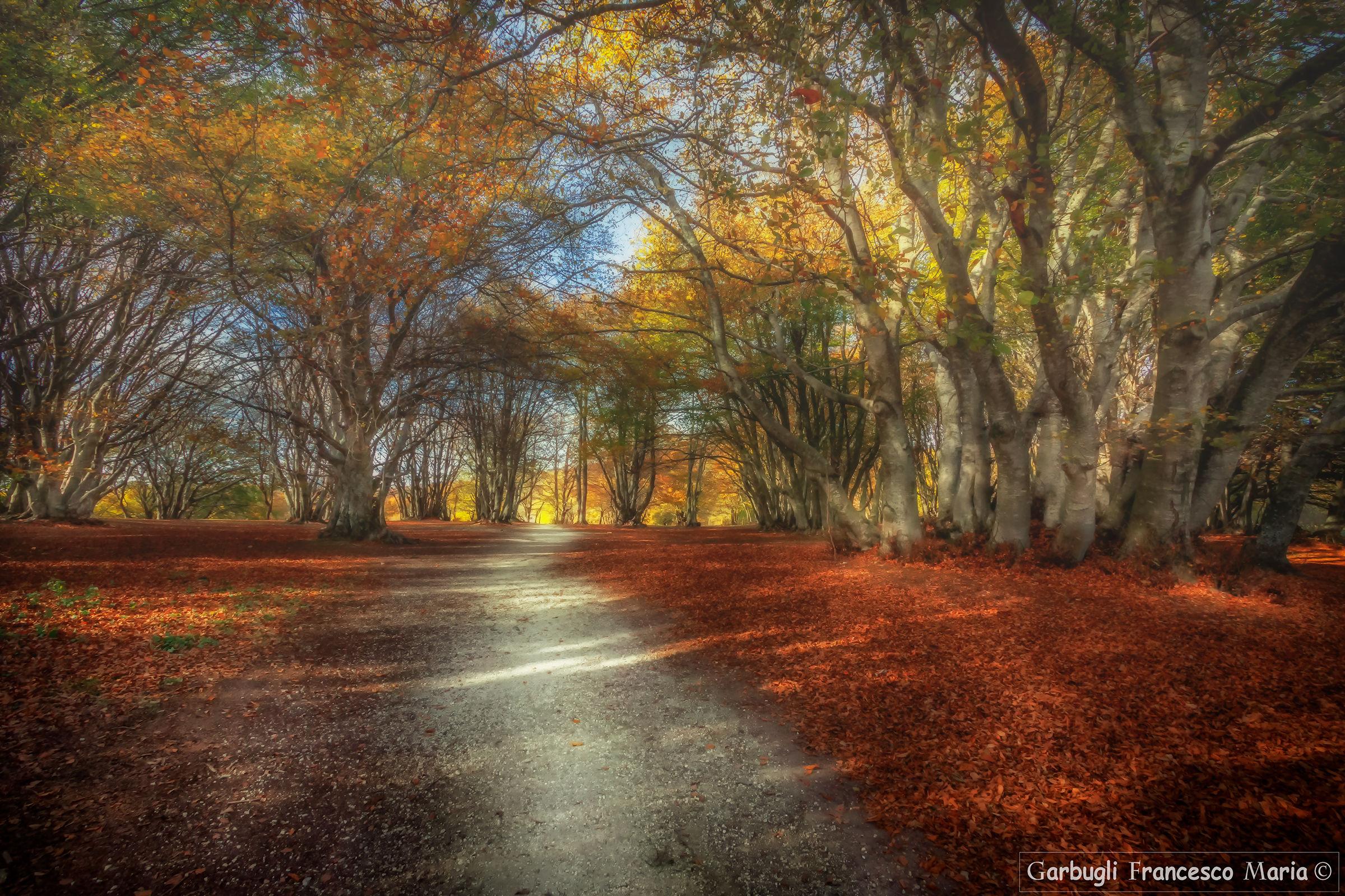 Autumn memories...