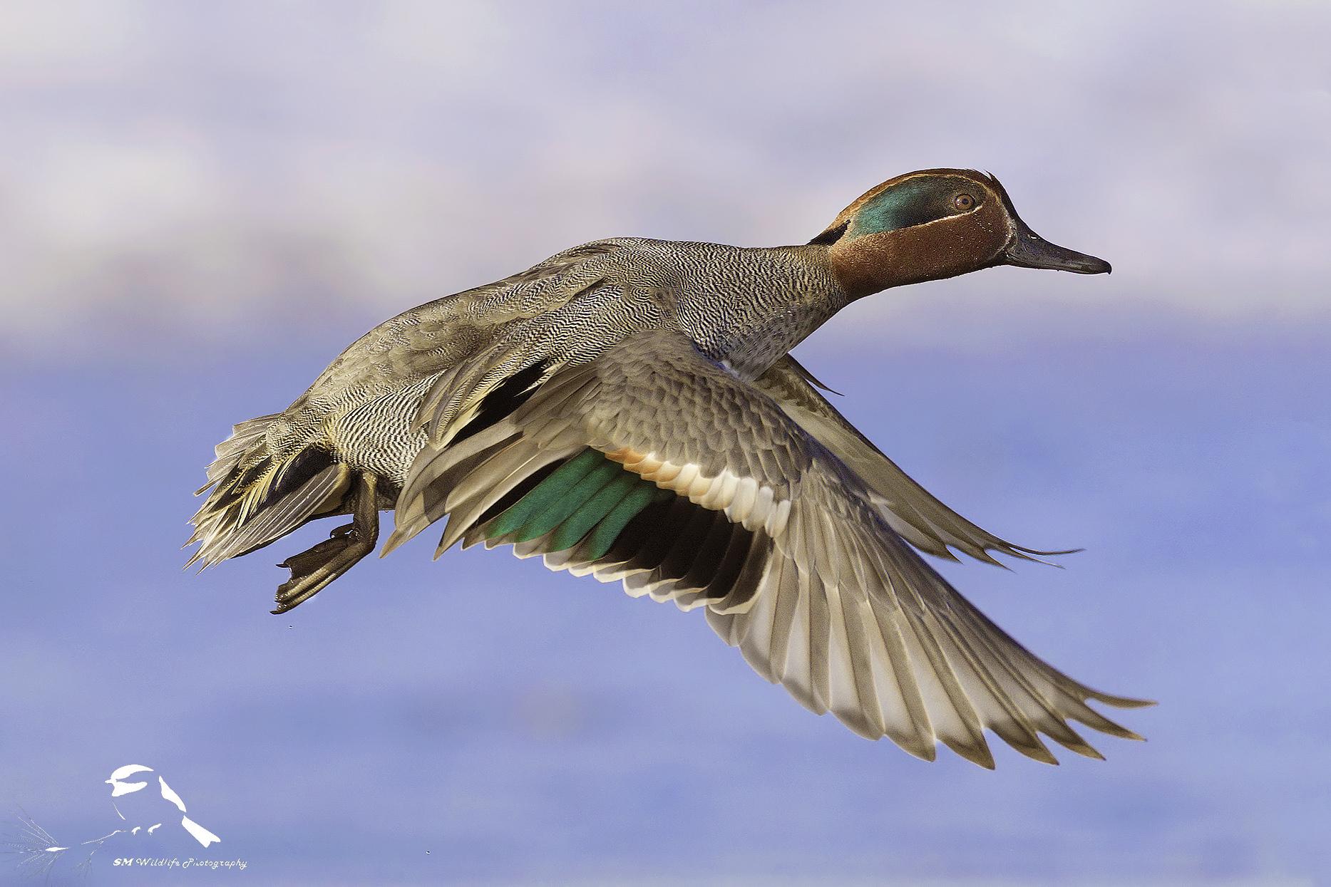 In flight.....