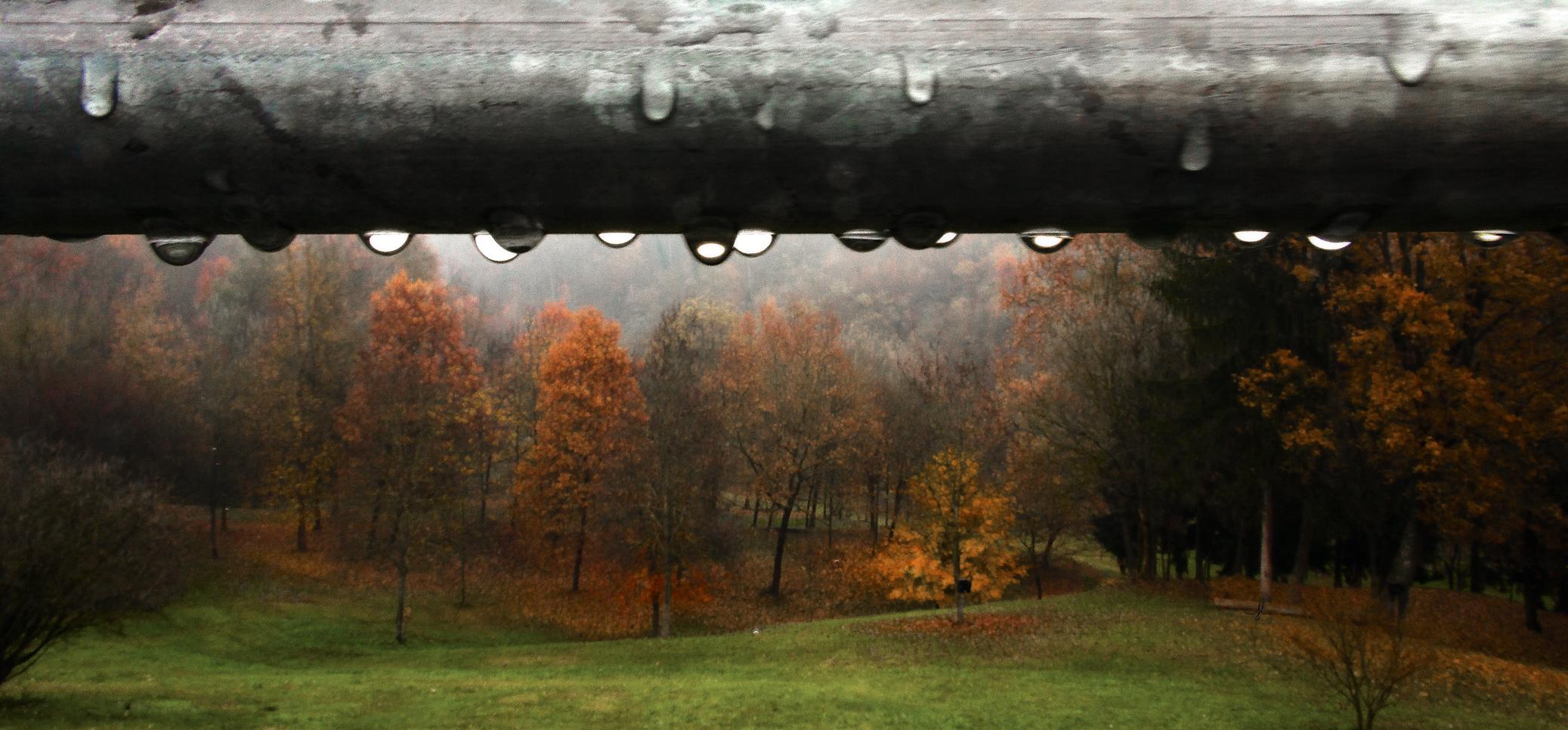 pioggia d'autunno..........