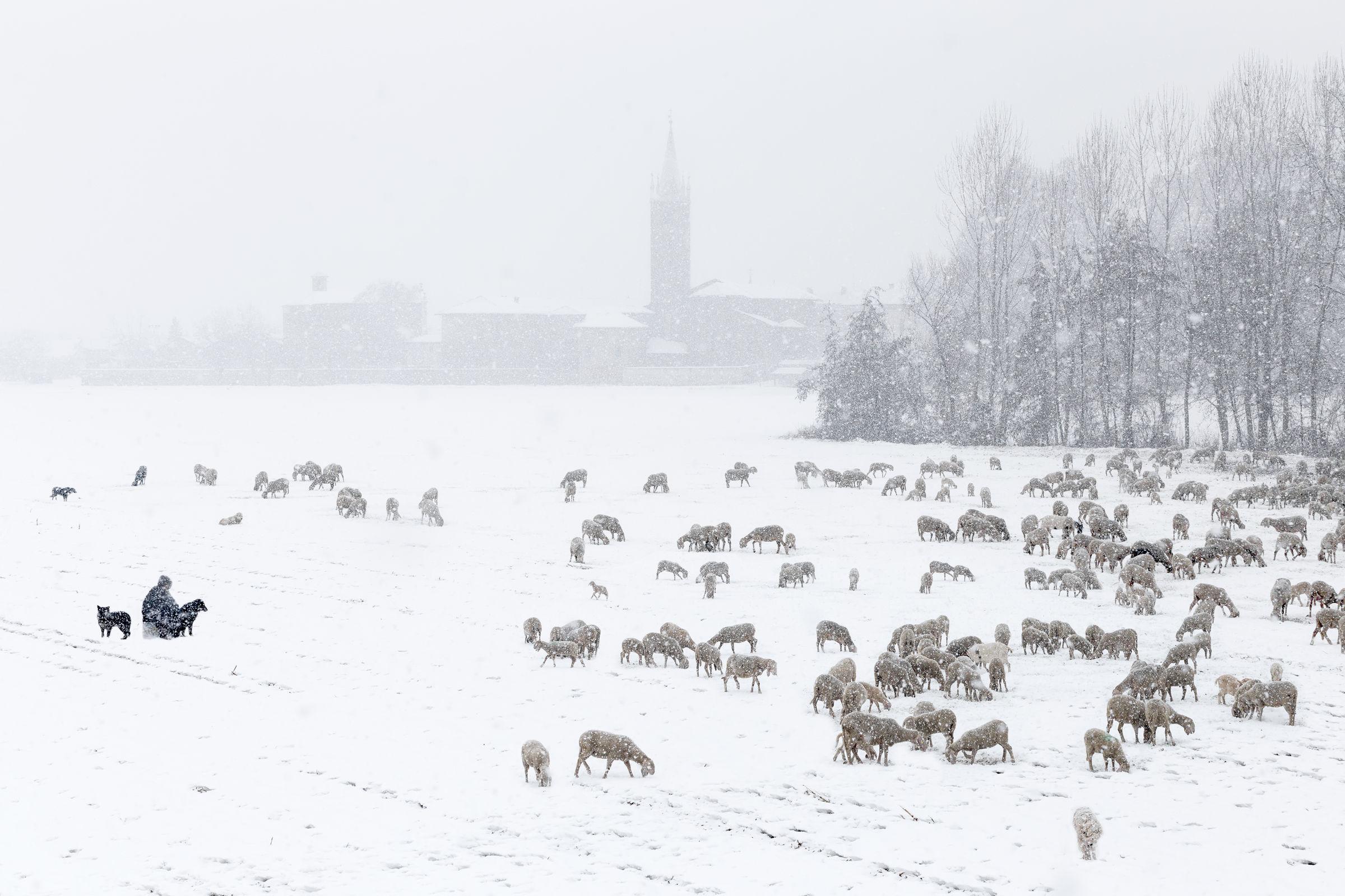 The shepherd in the snow...