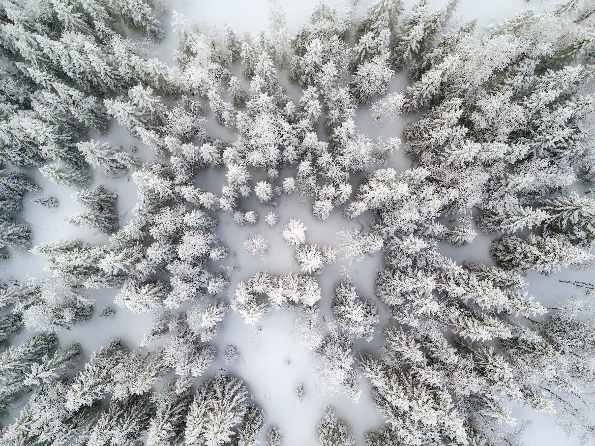 Frozen forest...