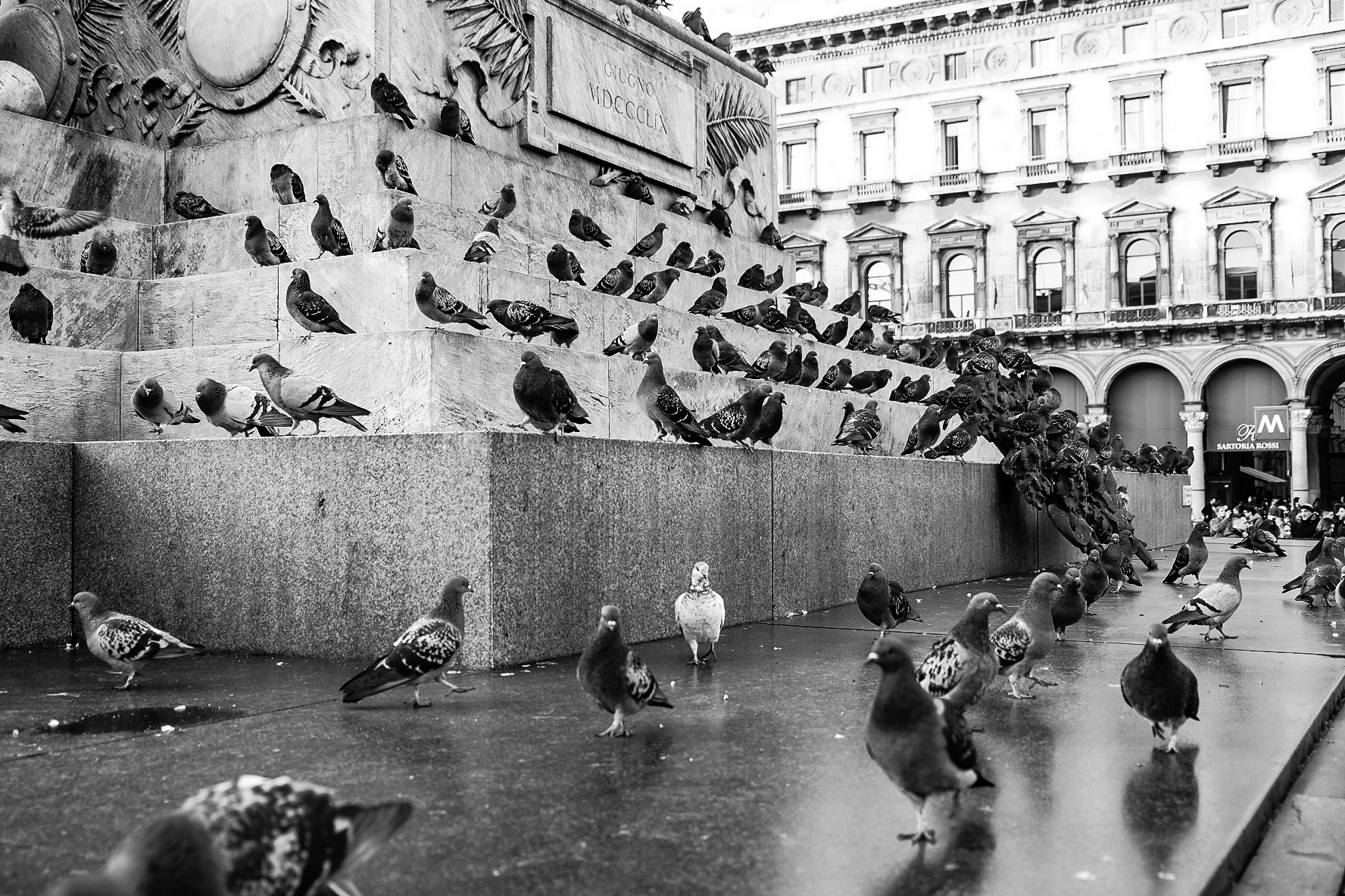 pigeons in the square ......