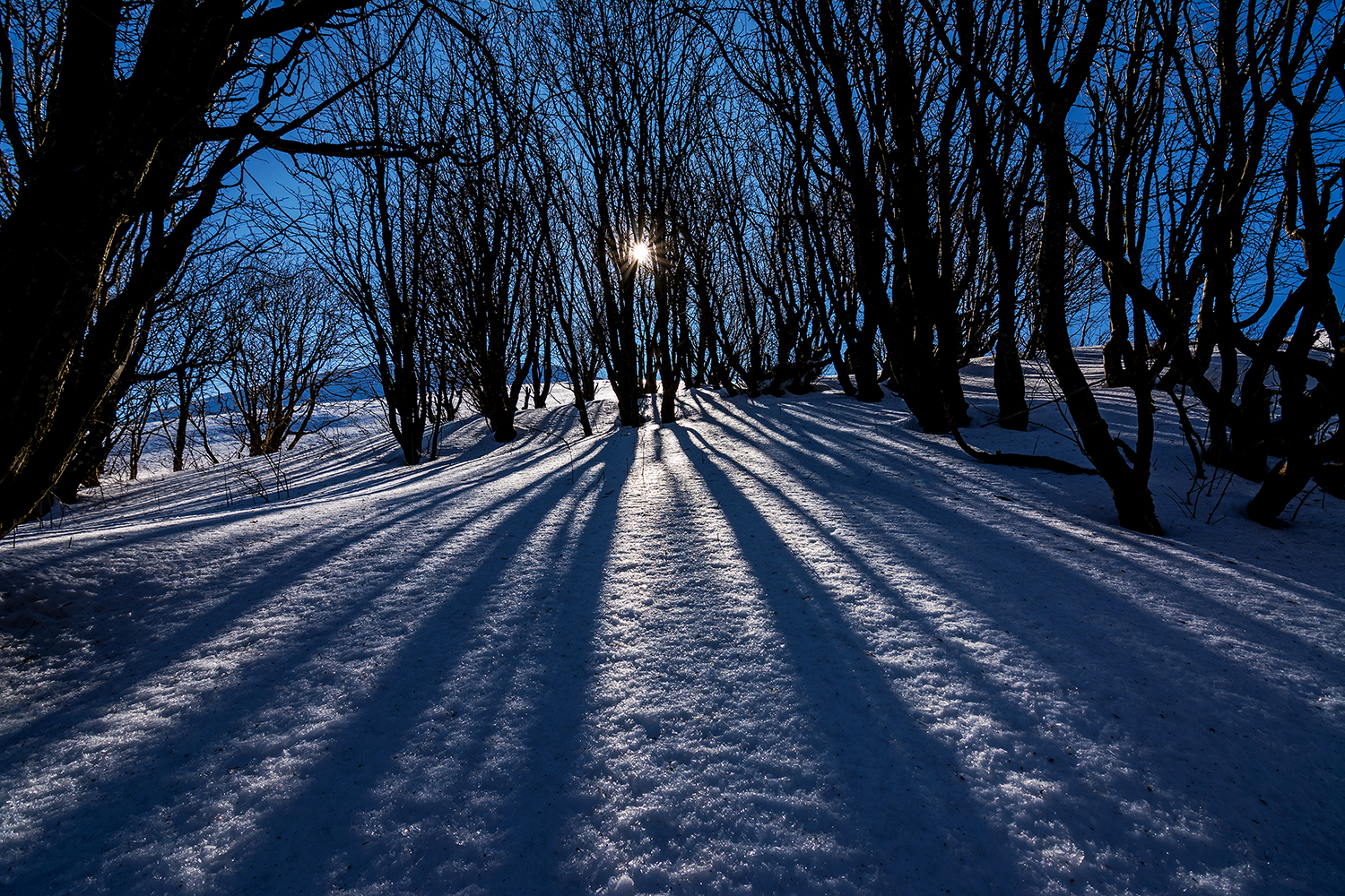 Backlight on the snow...
