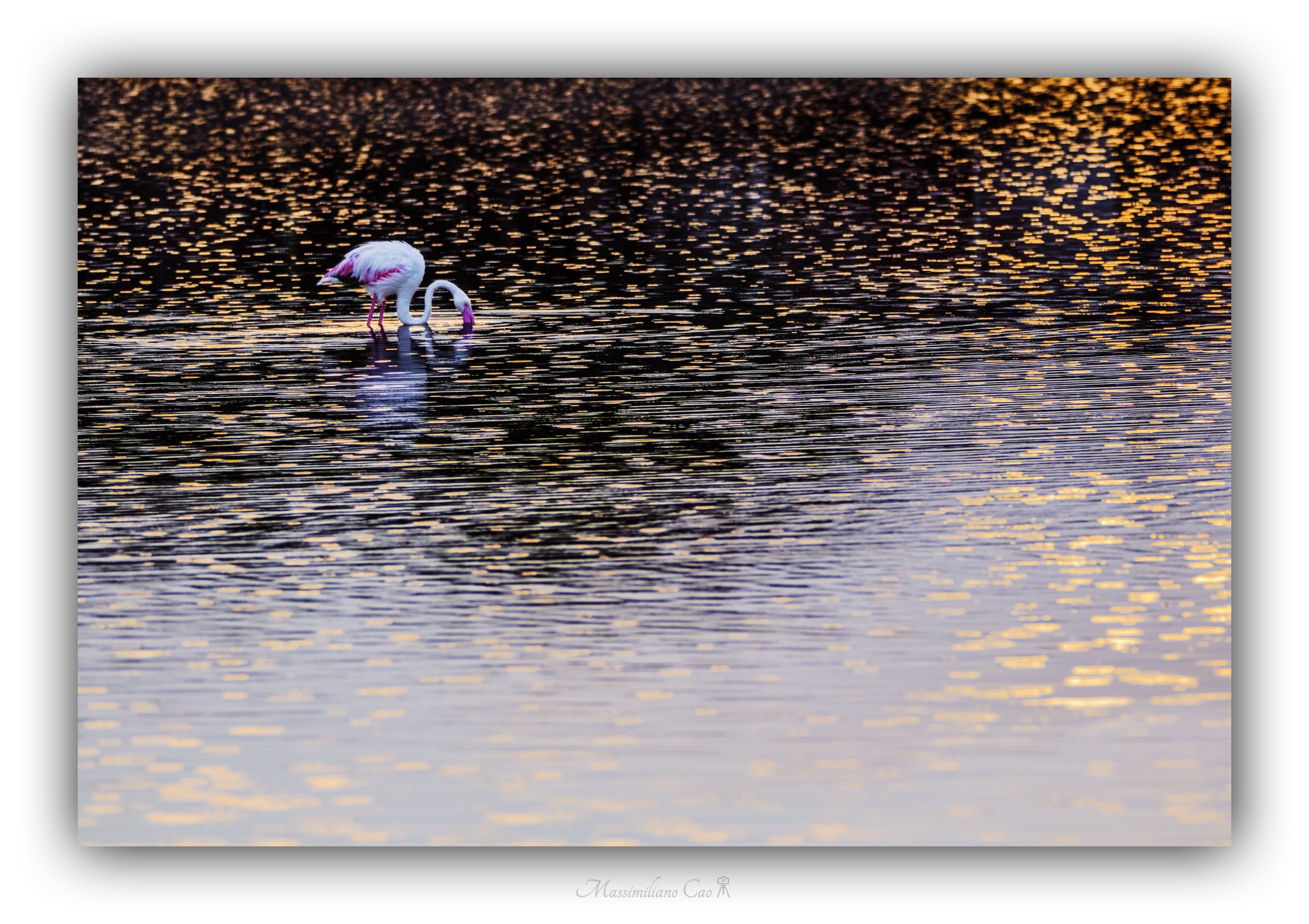 Flamingo at sunset...