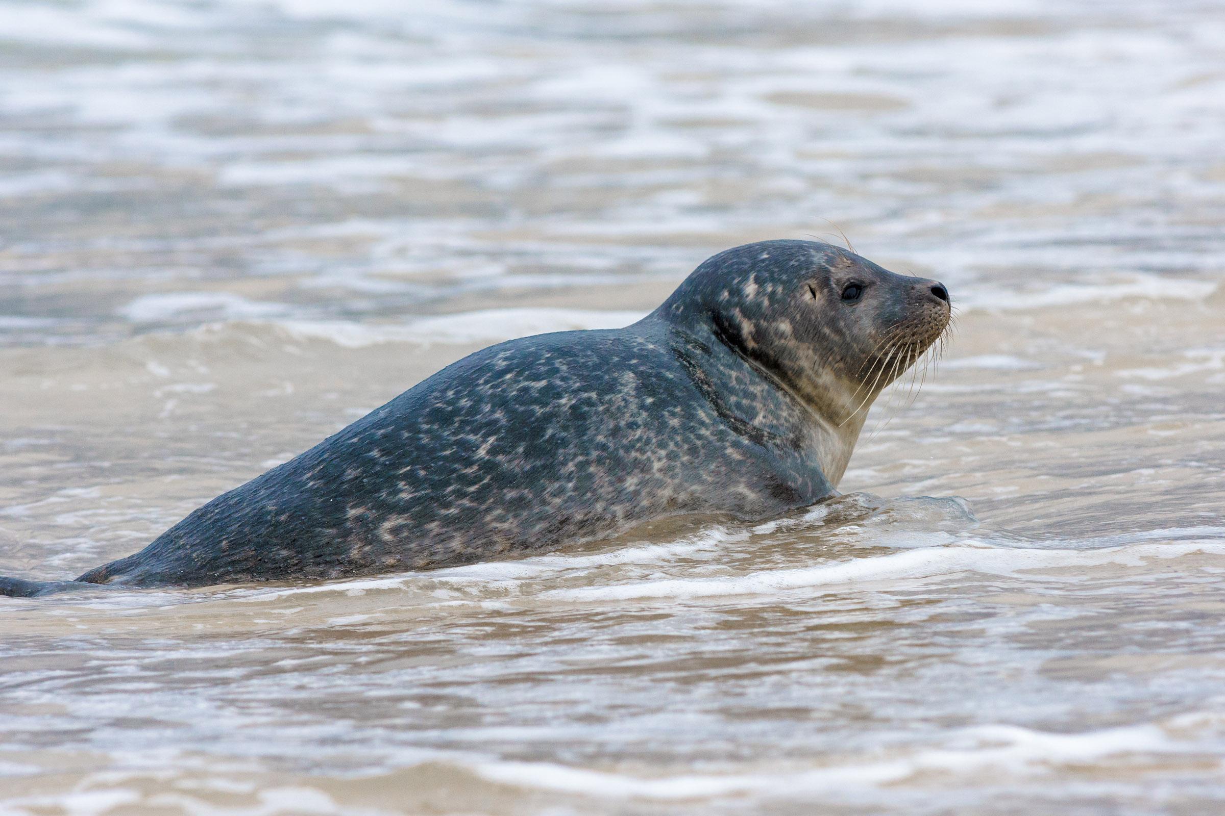 A tu per tu con la foca!...