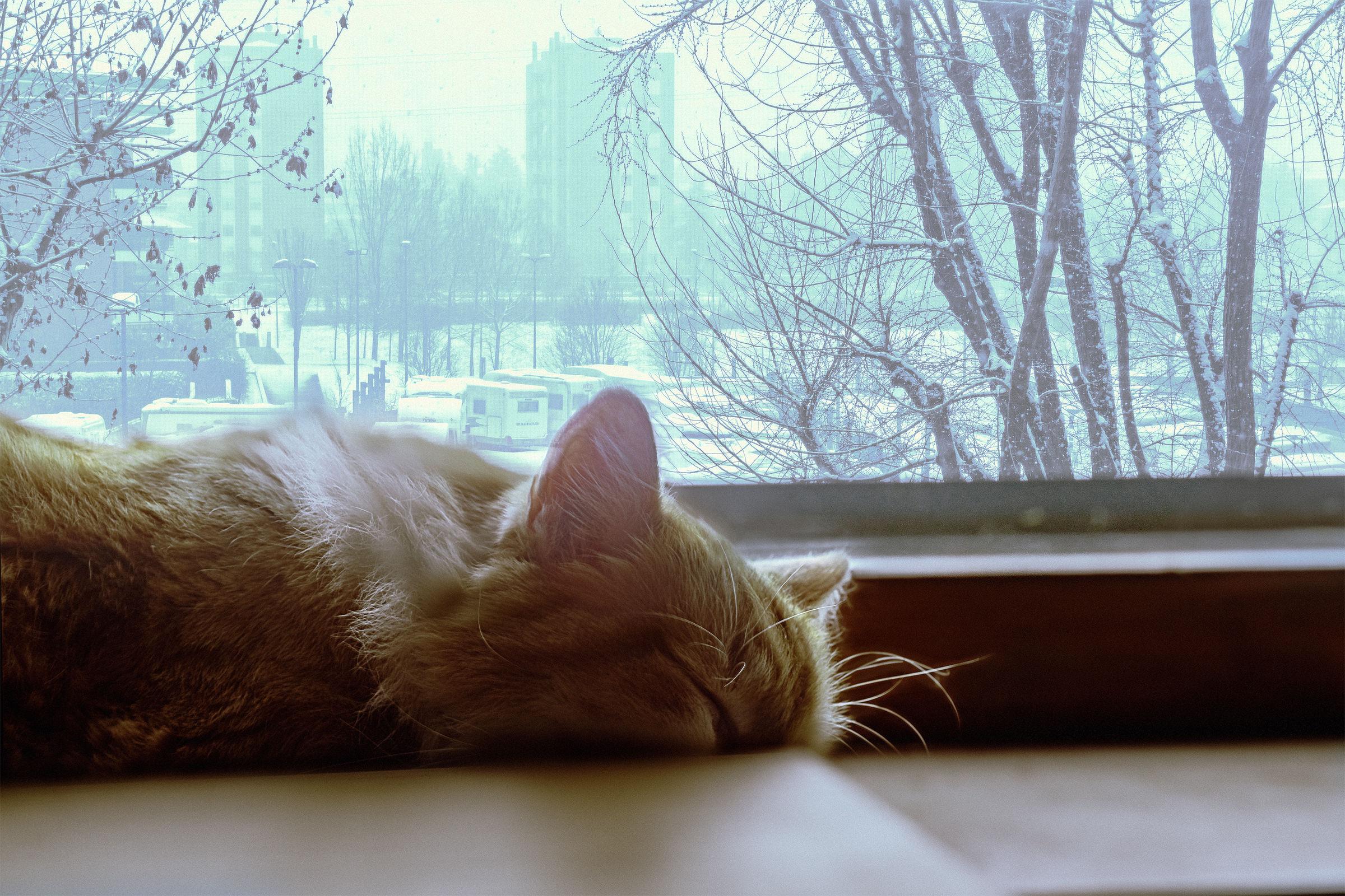 The sense of Micione for the snow...