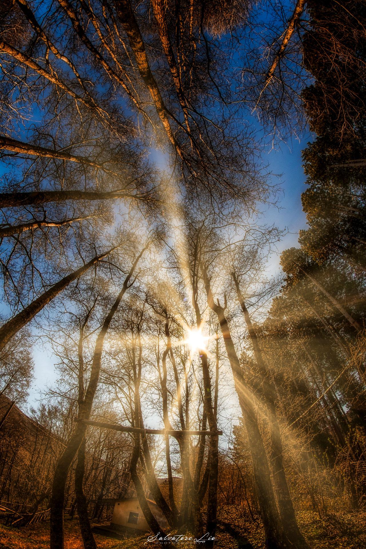 forest sunrays...