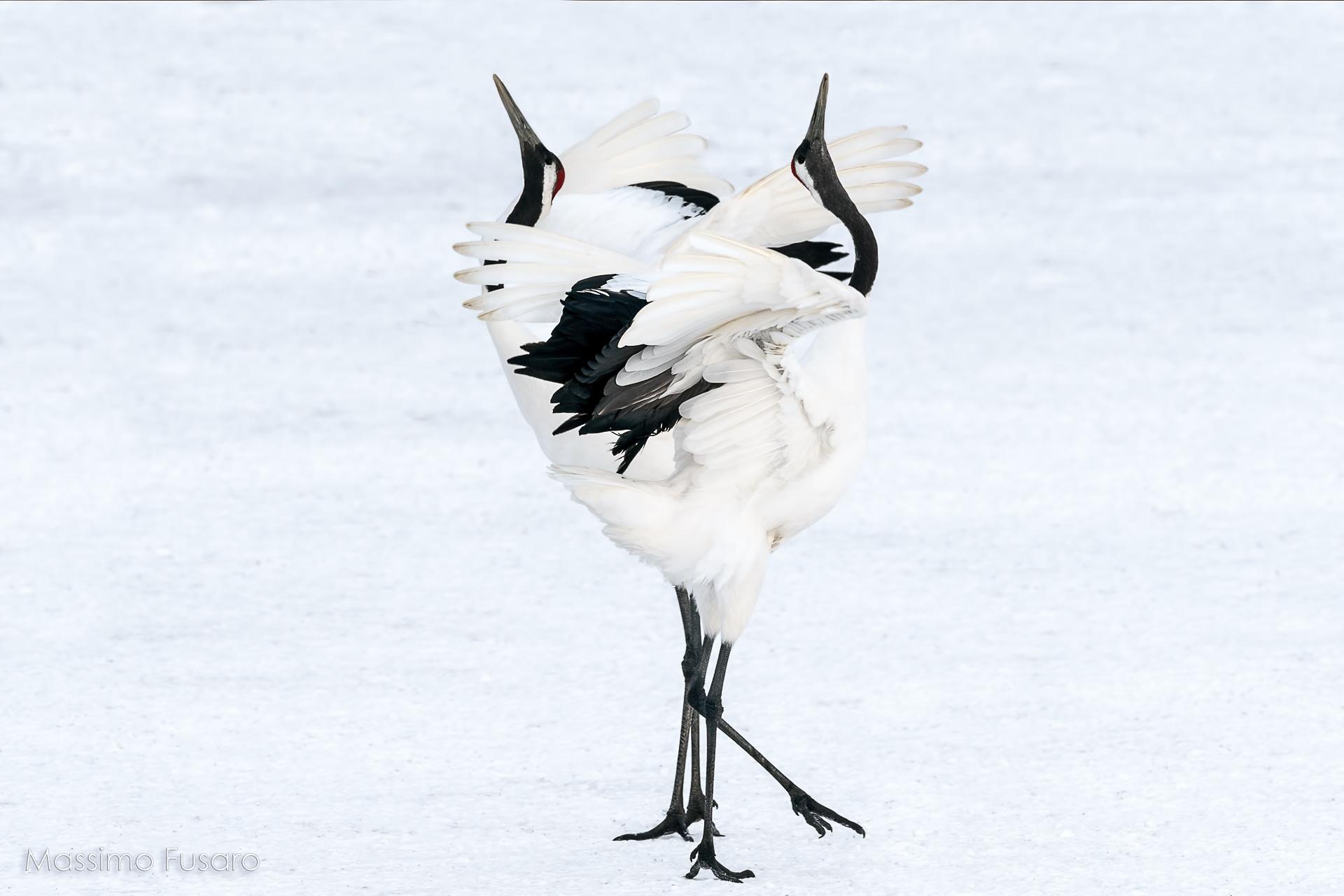 The Crane dance according to Act...