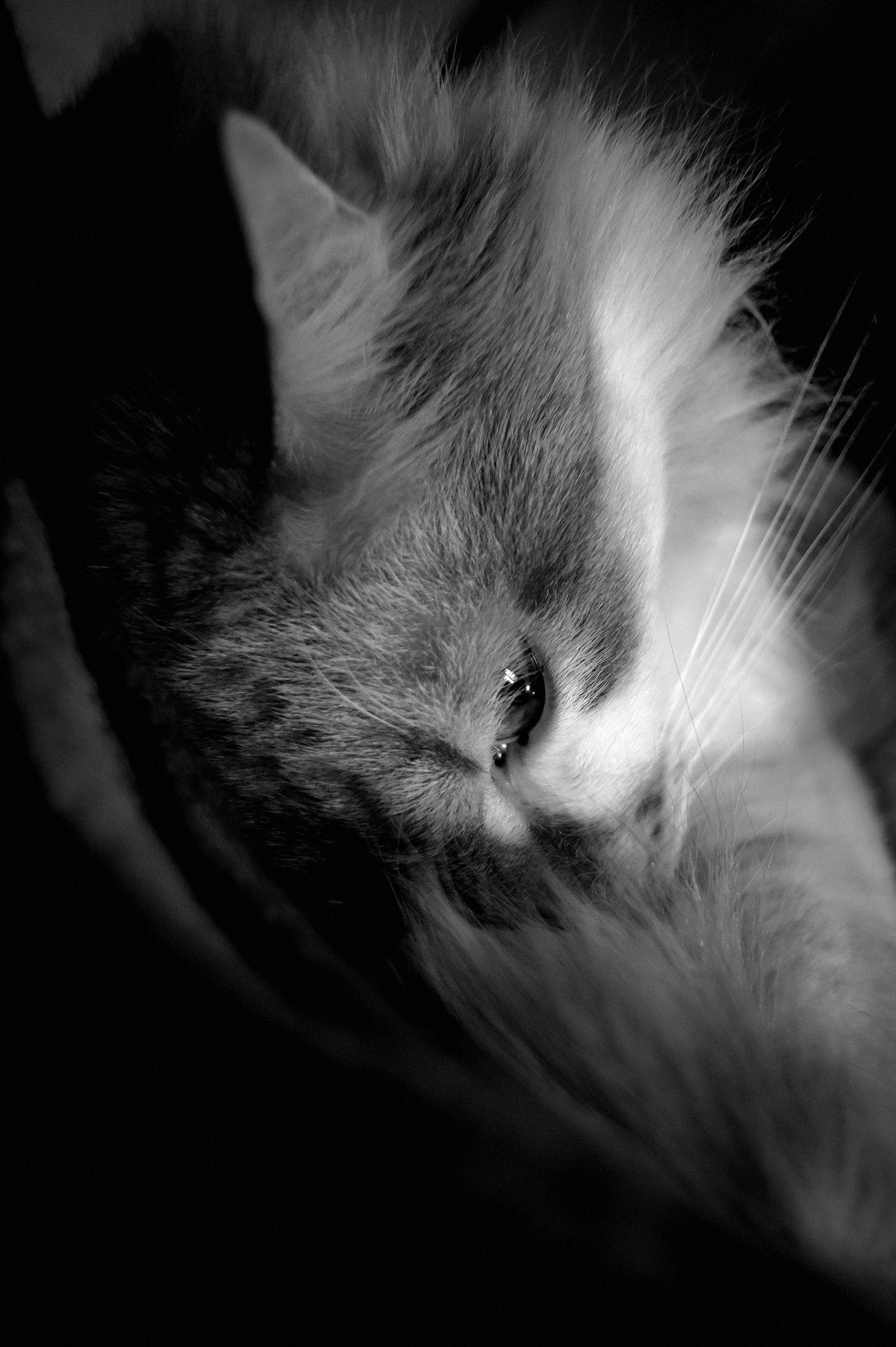 Feline cut BN...