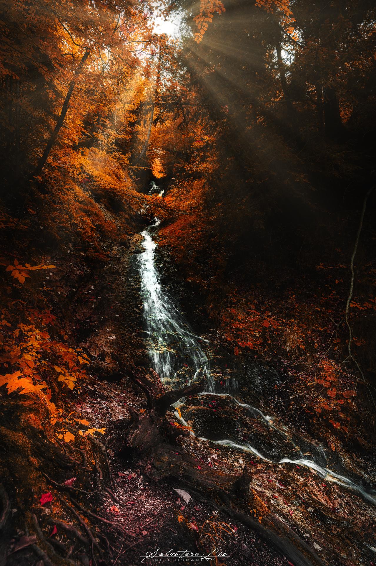 La foresta Incantata...