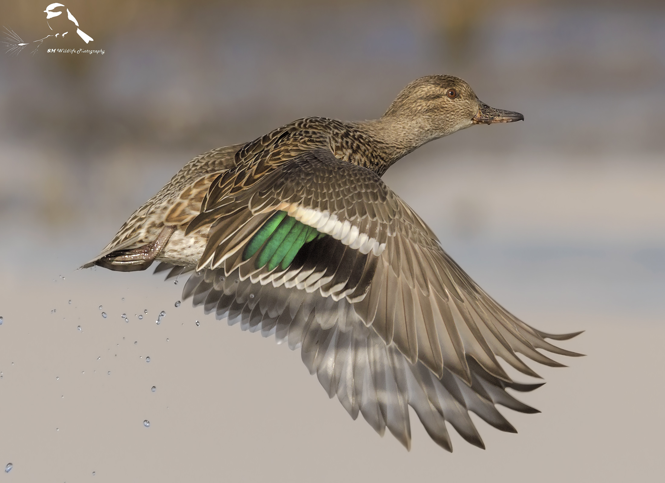 Female in Flight...