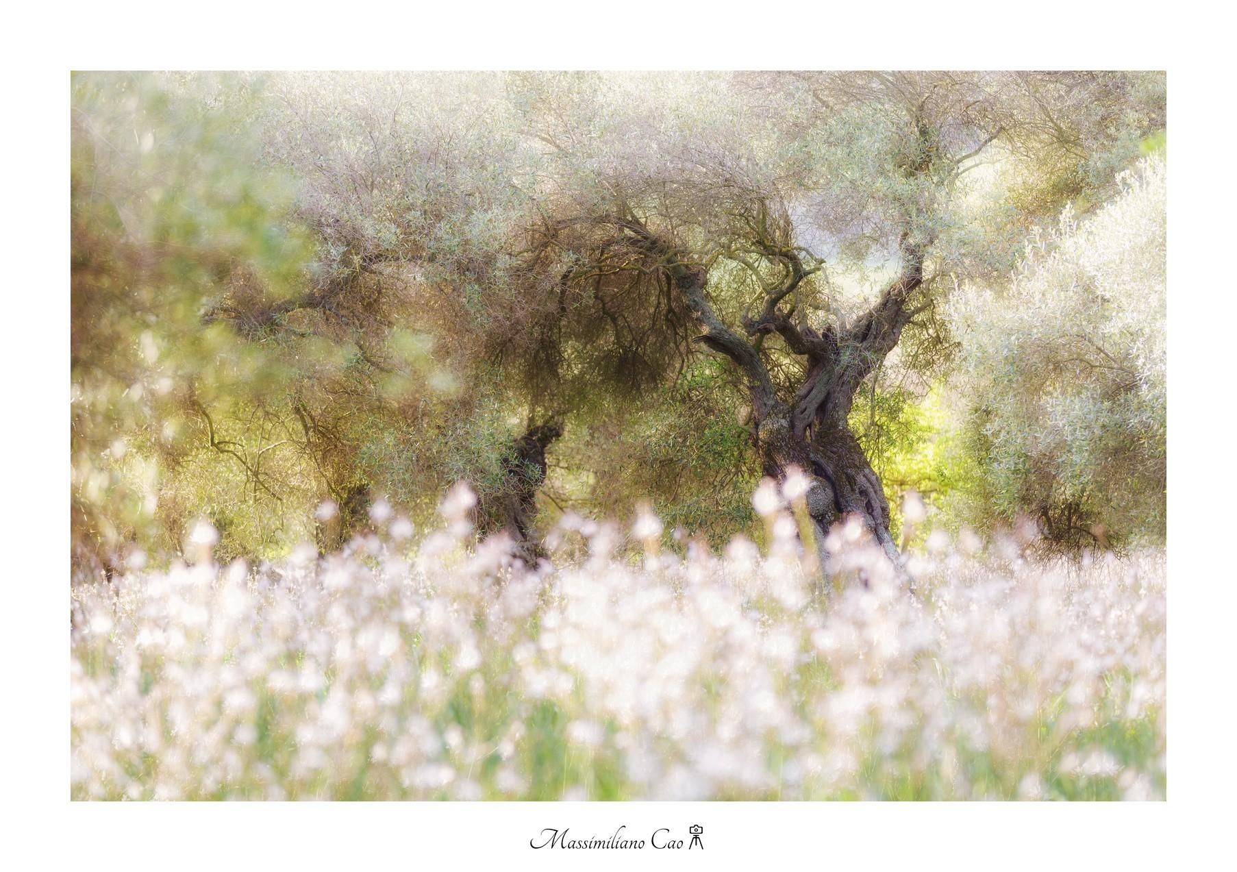Il paradiso degli ulivi...