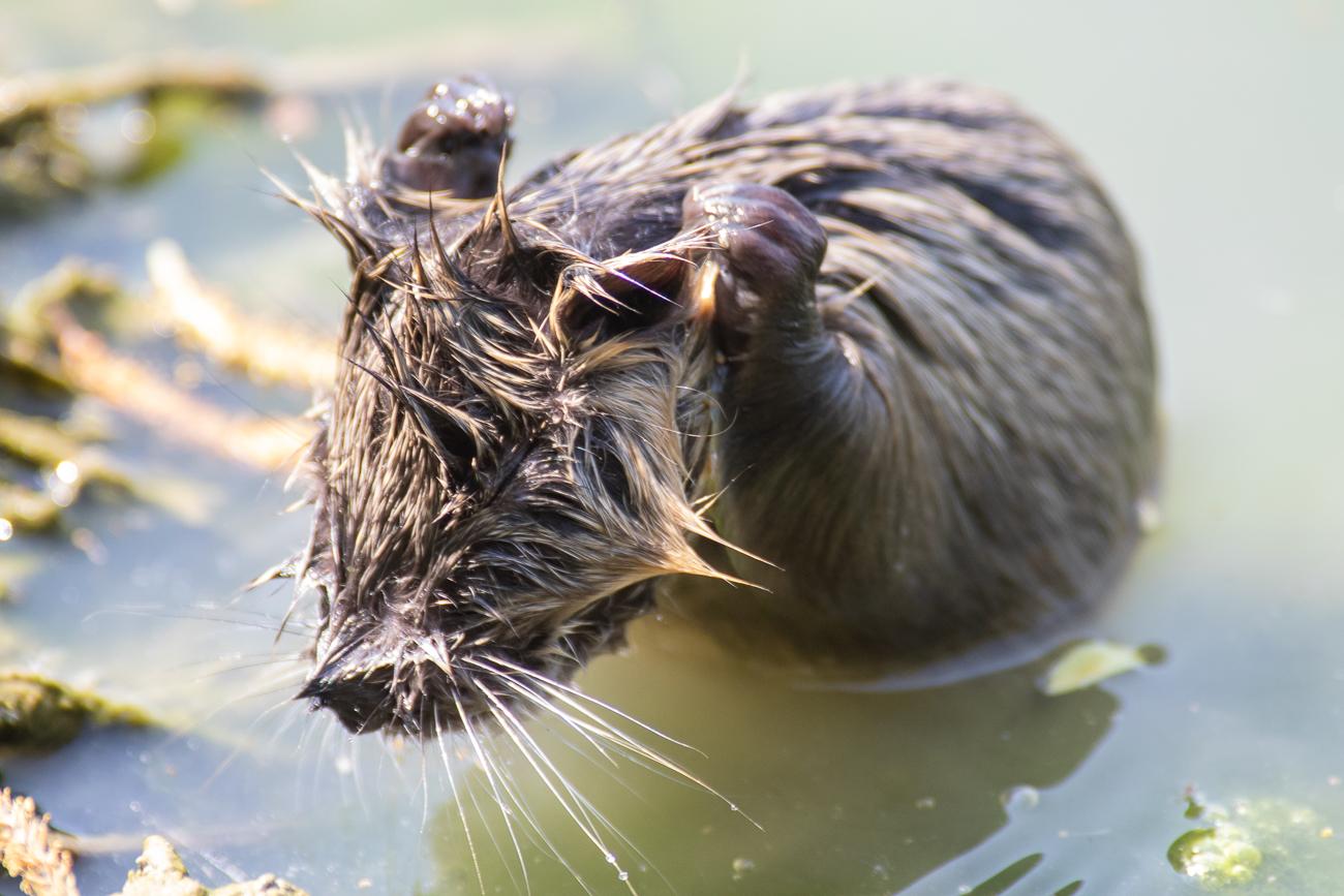 baby Otter...