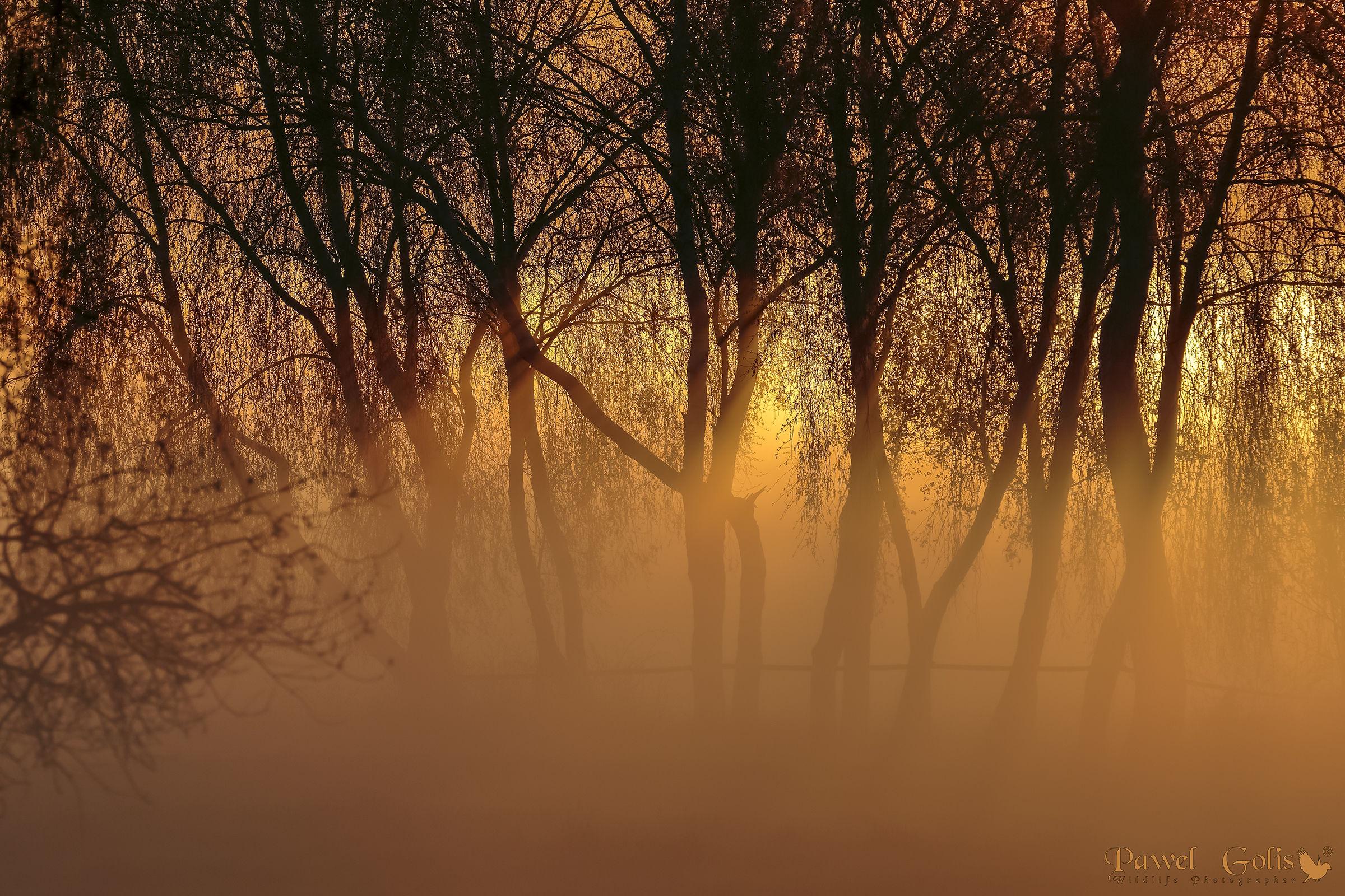 Sunset in fog...
