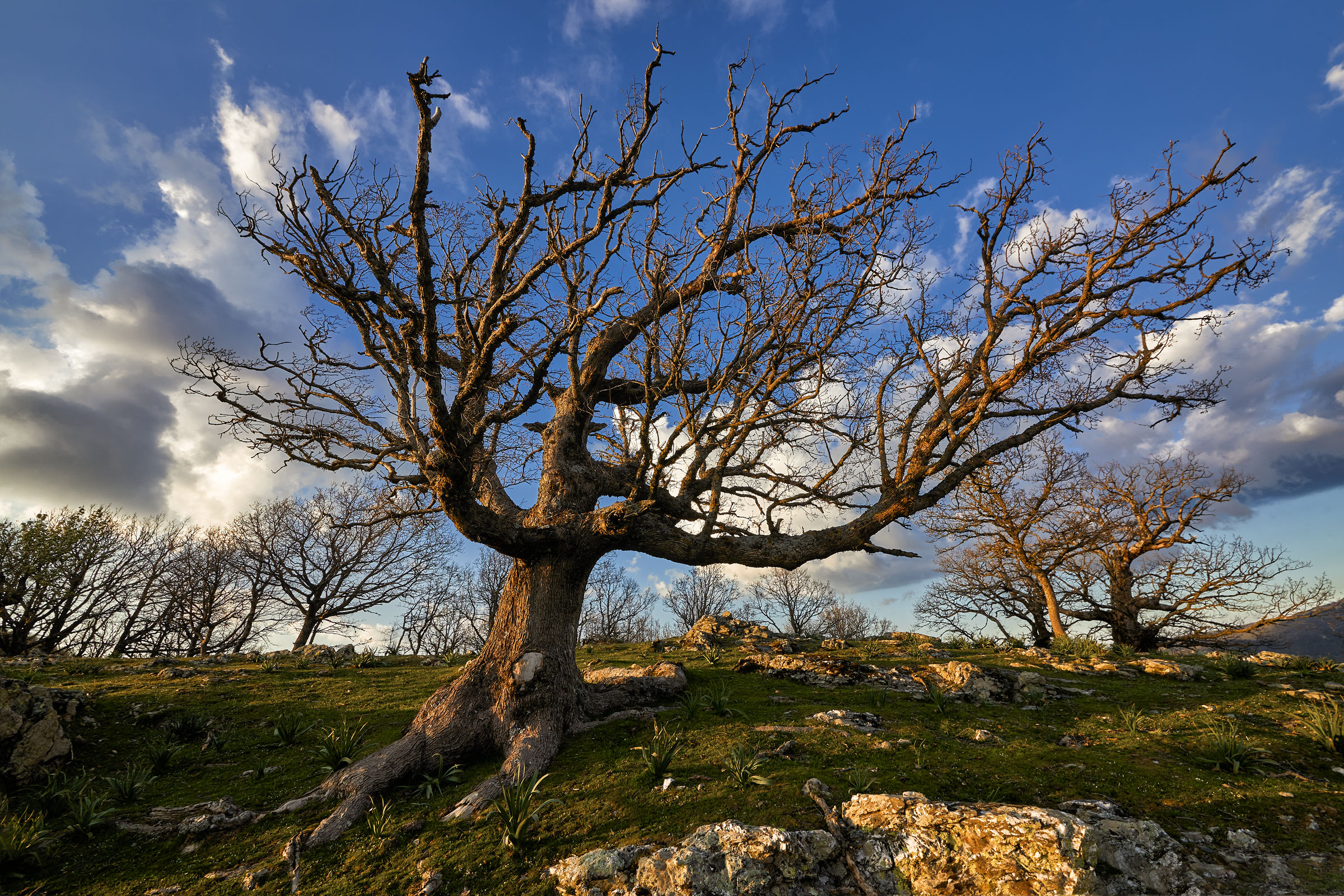 L'albero...