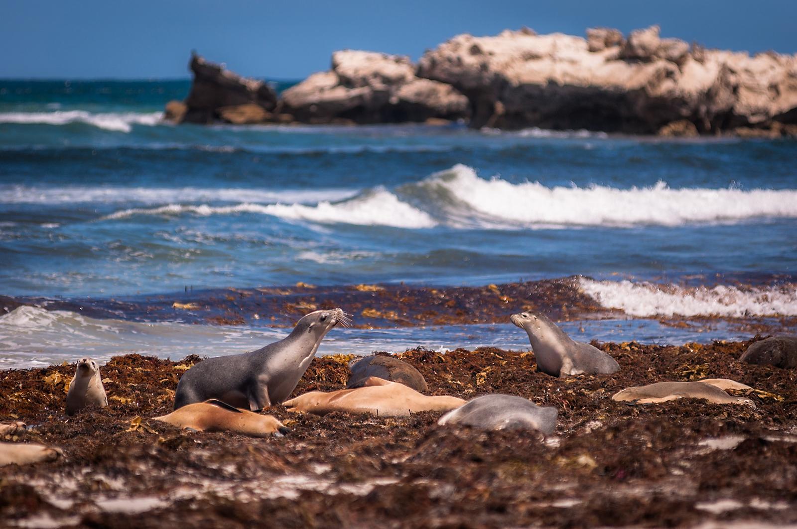 Seal Bay...
