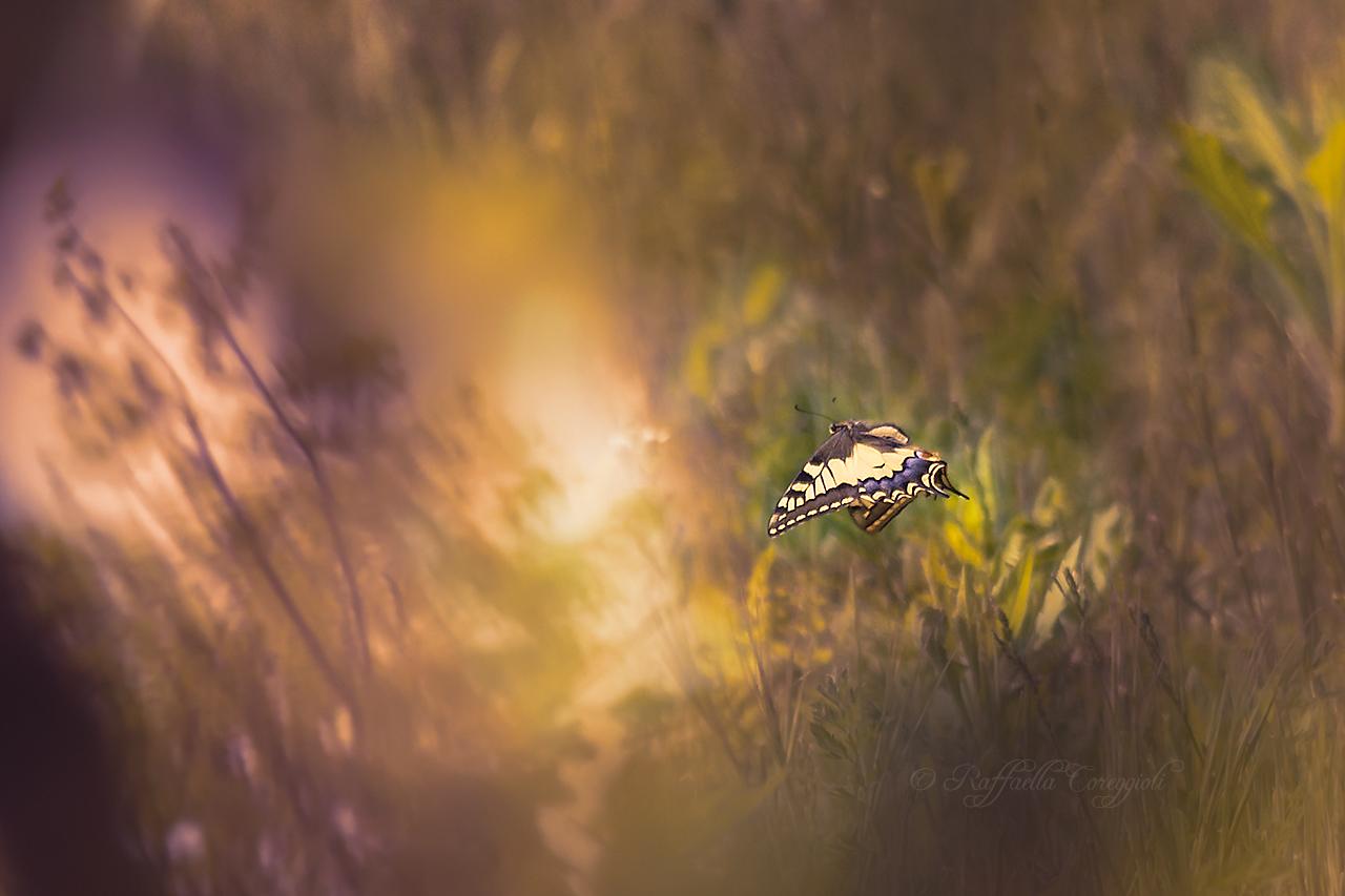 Gentil farfalletta......
