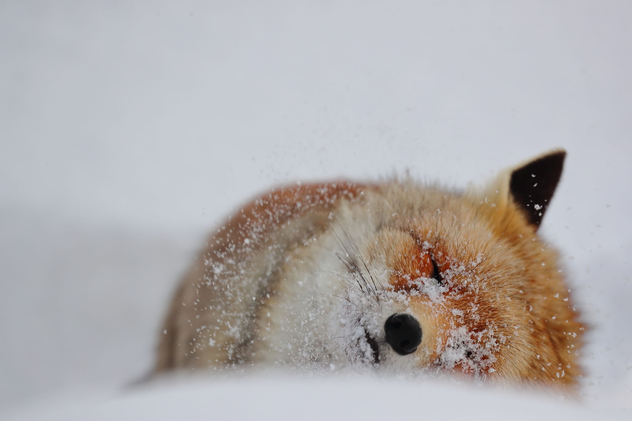 Snow bath...