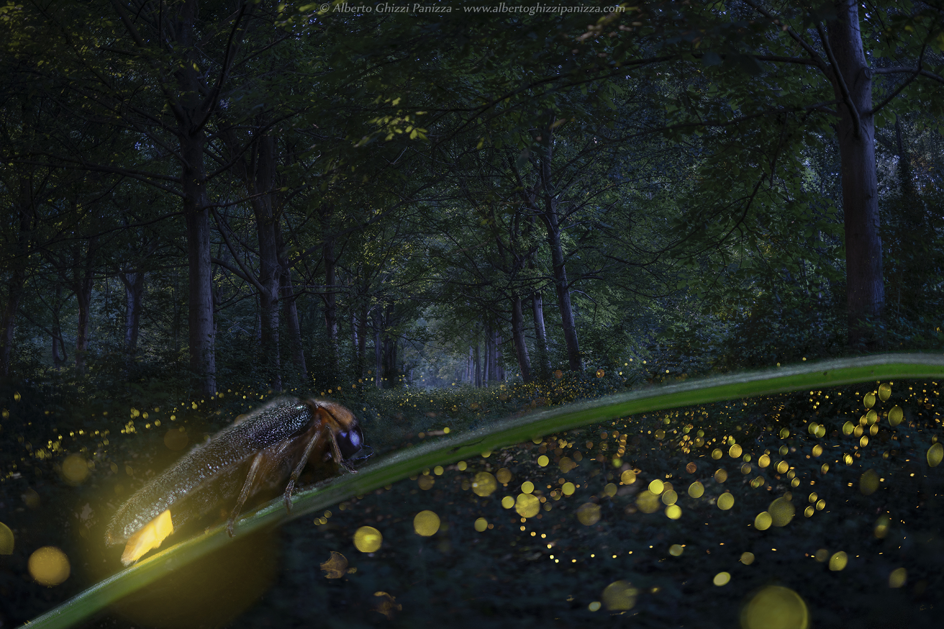 The magic of Fireflies...